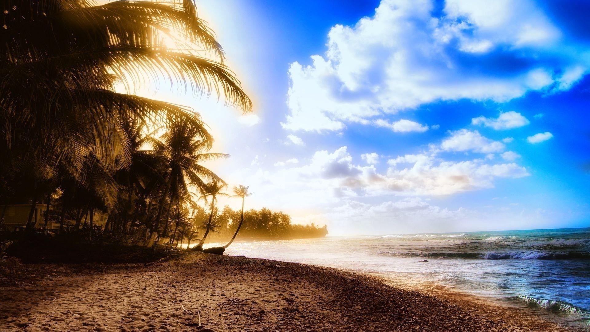 Palm trees on the beach HD wallpaper