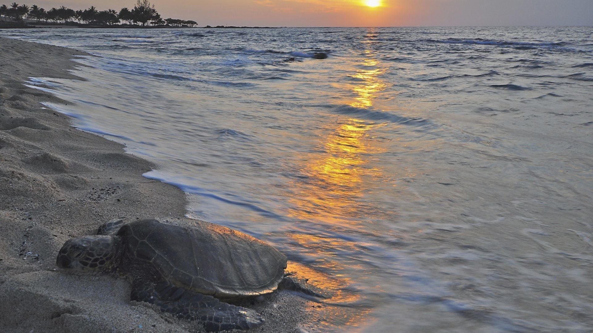 Hawaiian Tag – Ocean Honu Polynesian Polynesia Island Sand Evening Hawaiian  Turtle Pacific Leatherback Sun Set