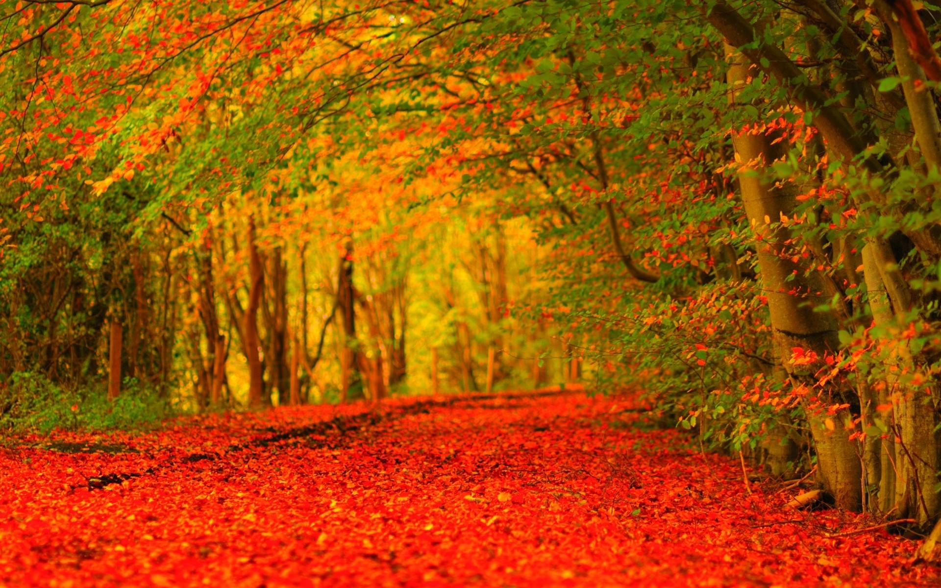 Autumn Wallpaper Widescreen – EchoMon