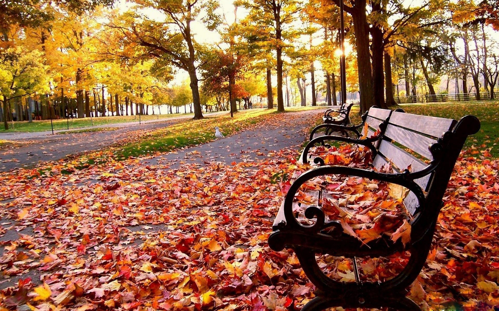 Fall-Desktop-Backgrounds-HD