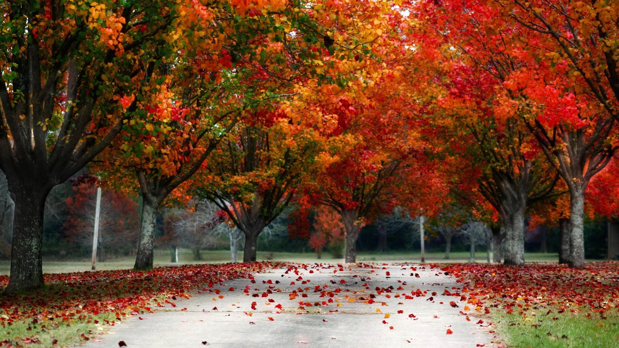 fall screen backgrounds free