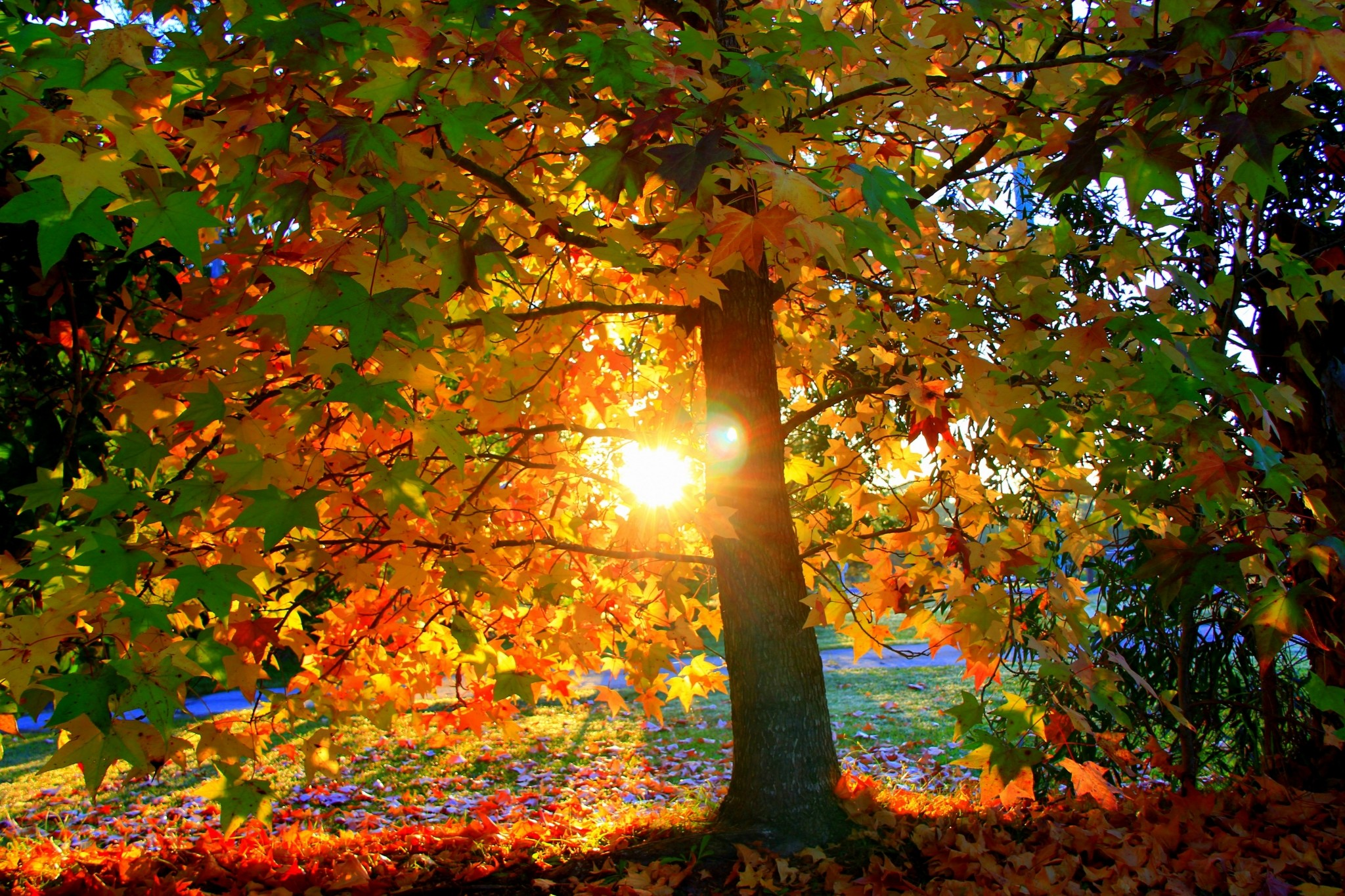 fall free picture backgrounds