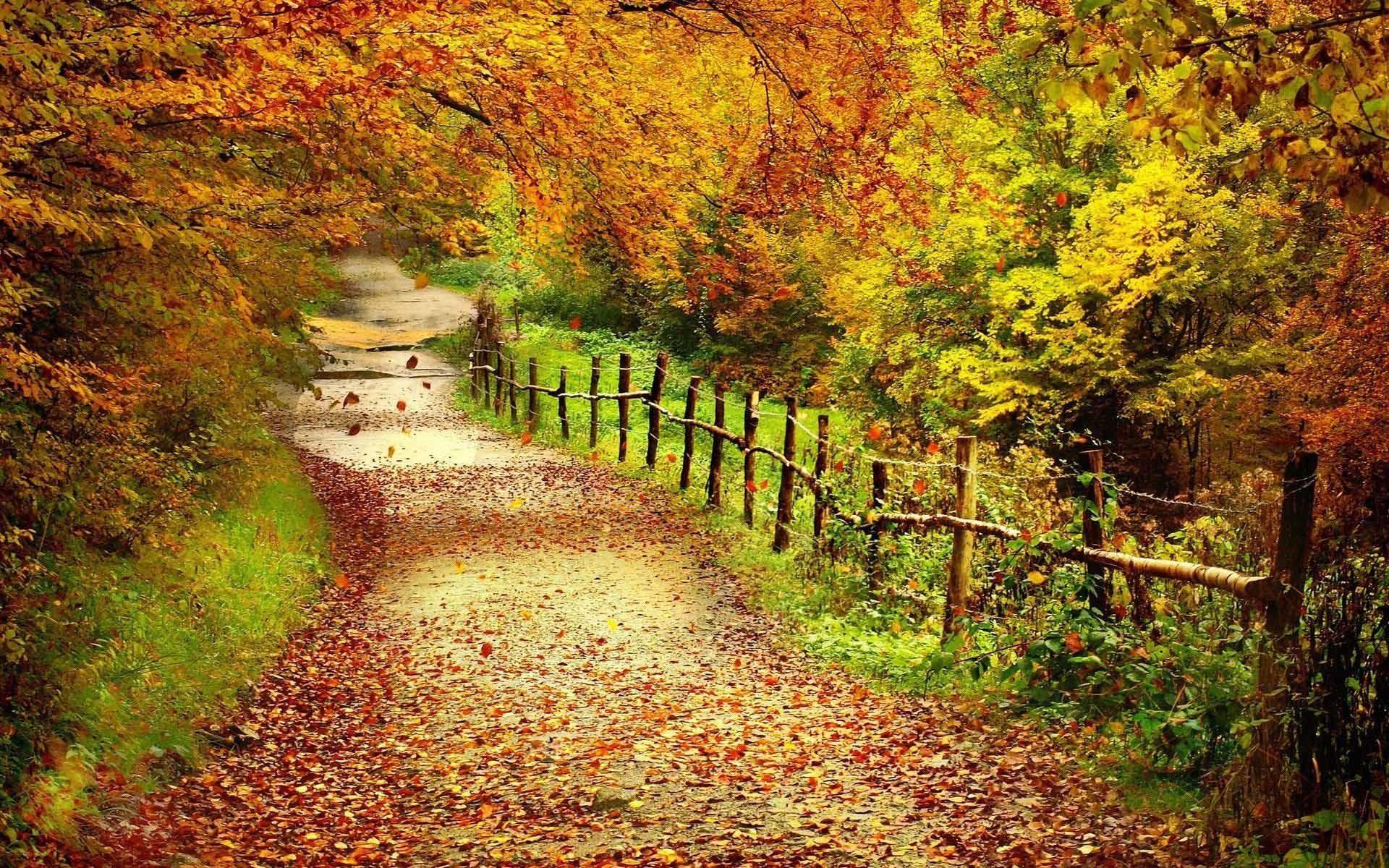HD Fall Foliage Wallpaper.