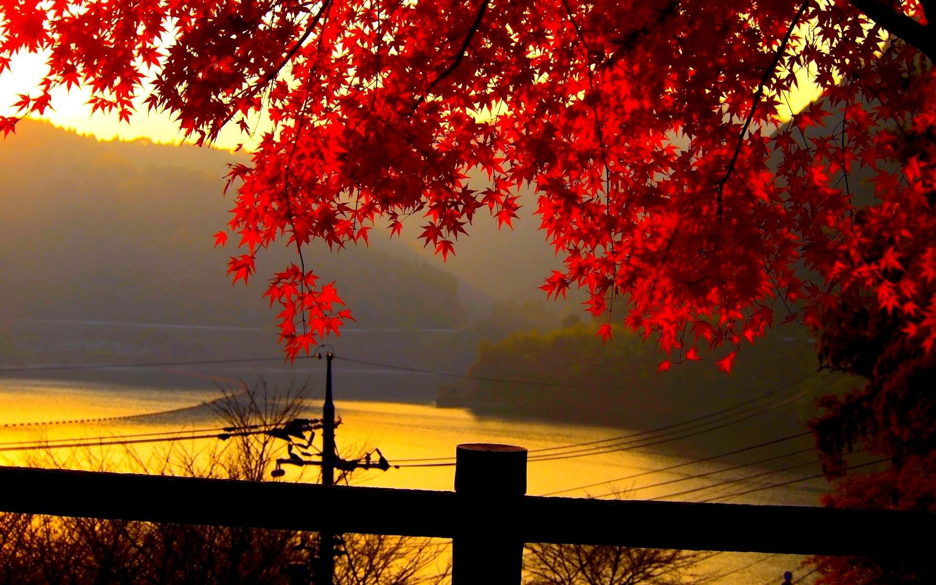 Autumn Leaves Wallpaper – Wallpapers