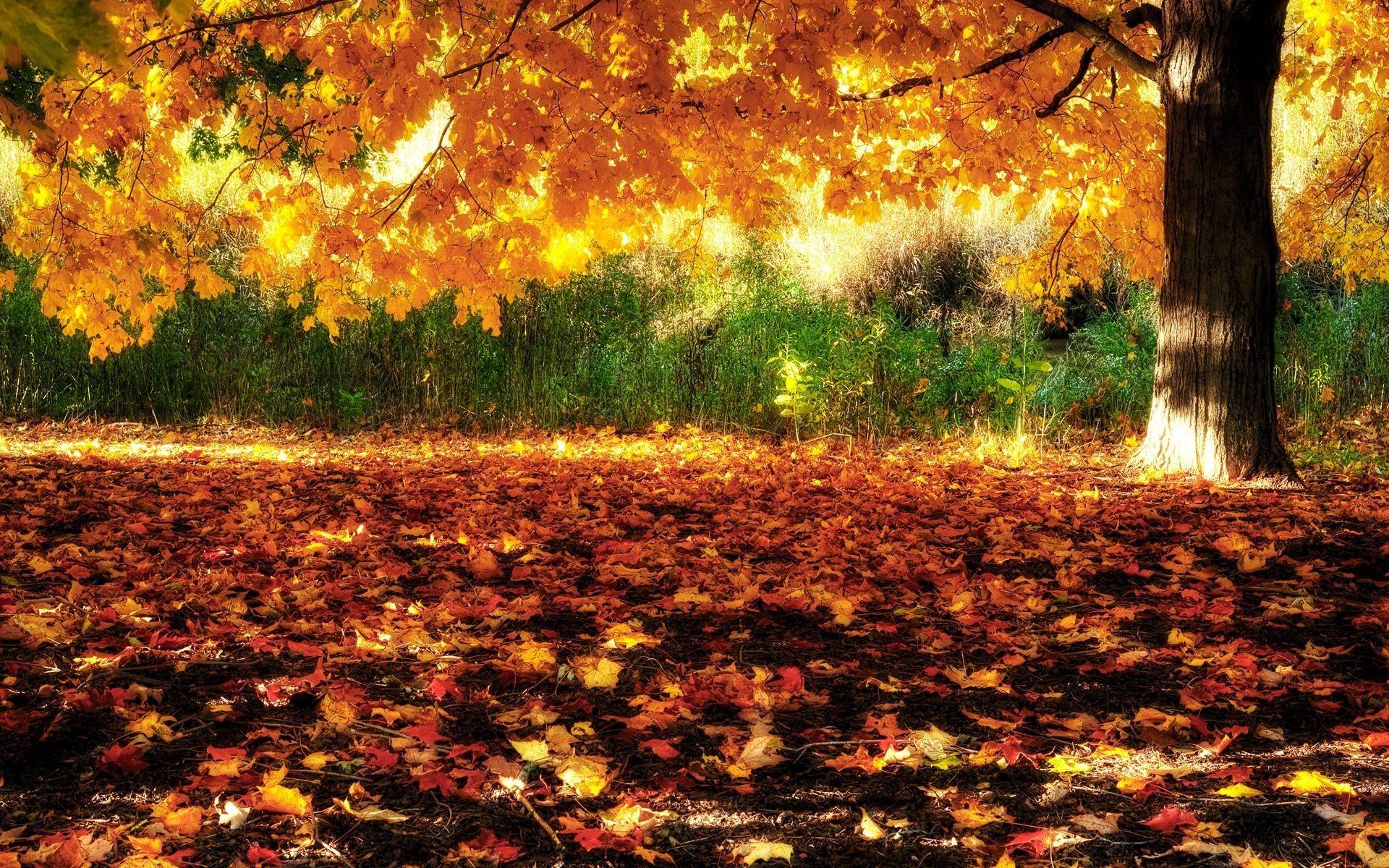 Fall Wallpapers Hd Widescreen
