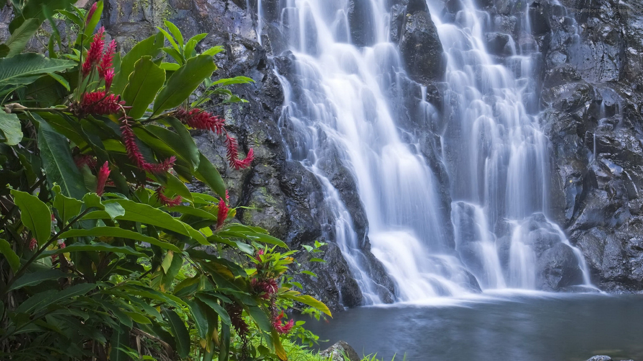 Images of Waterfalls Flowers – Yahoo Image Search Results