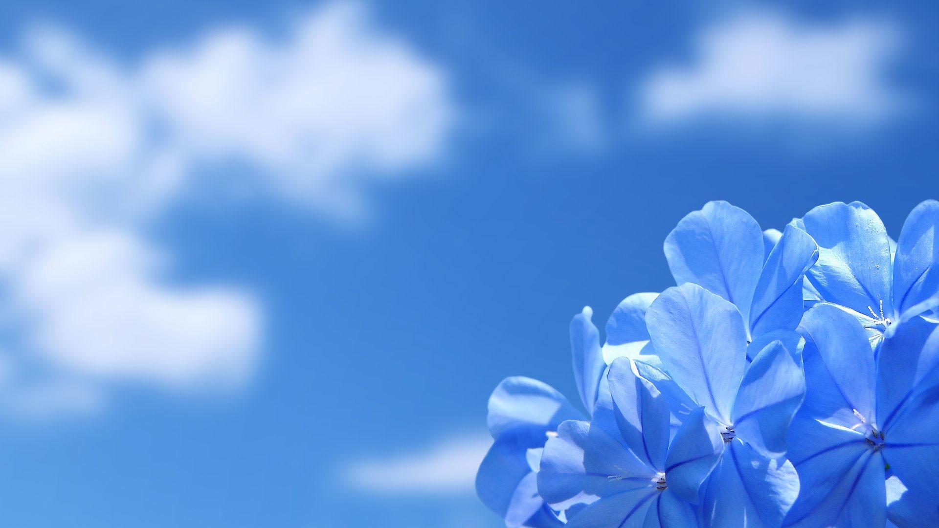 hd pics photos flowers blue sky desktop background wallpaper