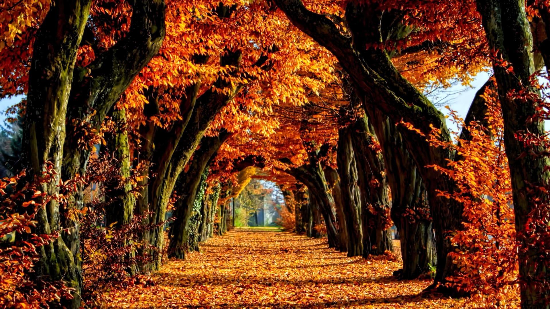 Fall Colors Wallpaper Abstract – Tera Wallpaper