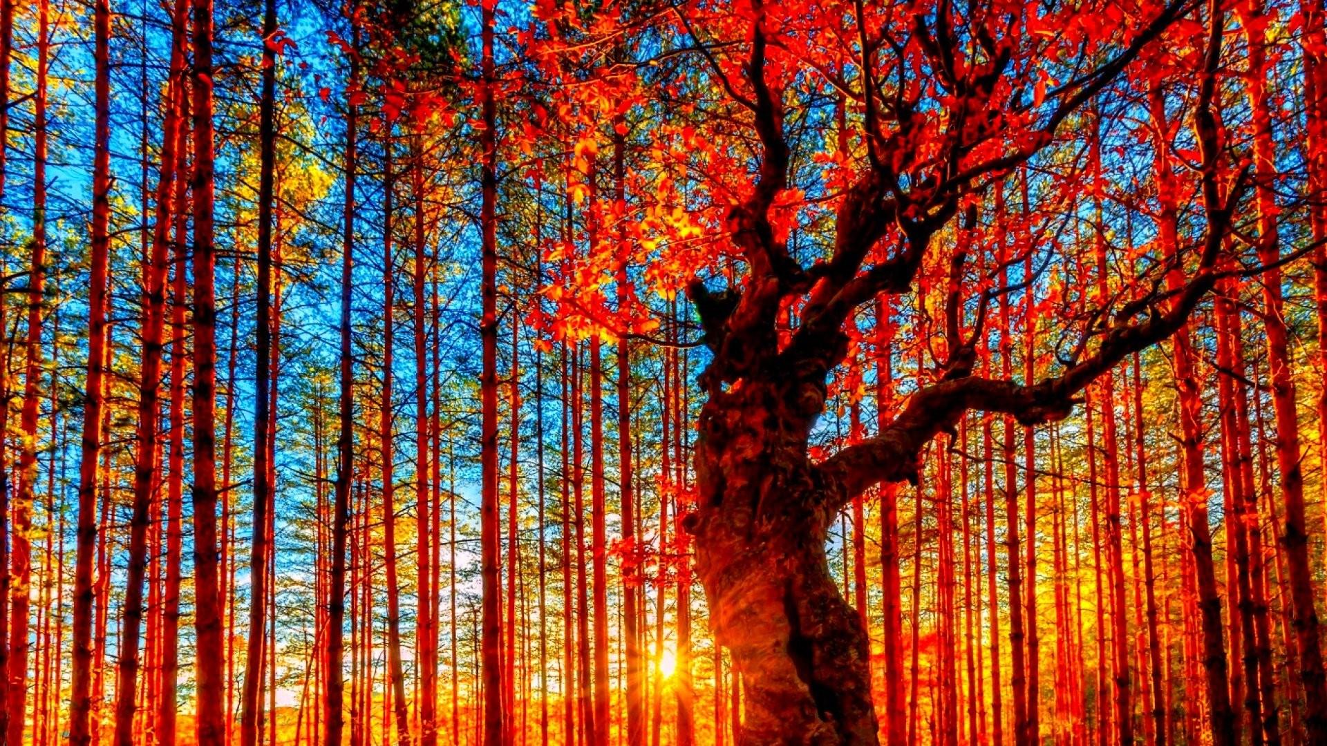 Autumn season fall color tree forest nature landscape .