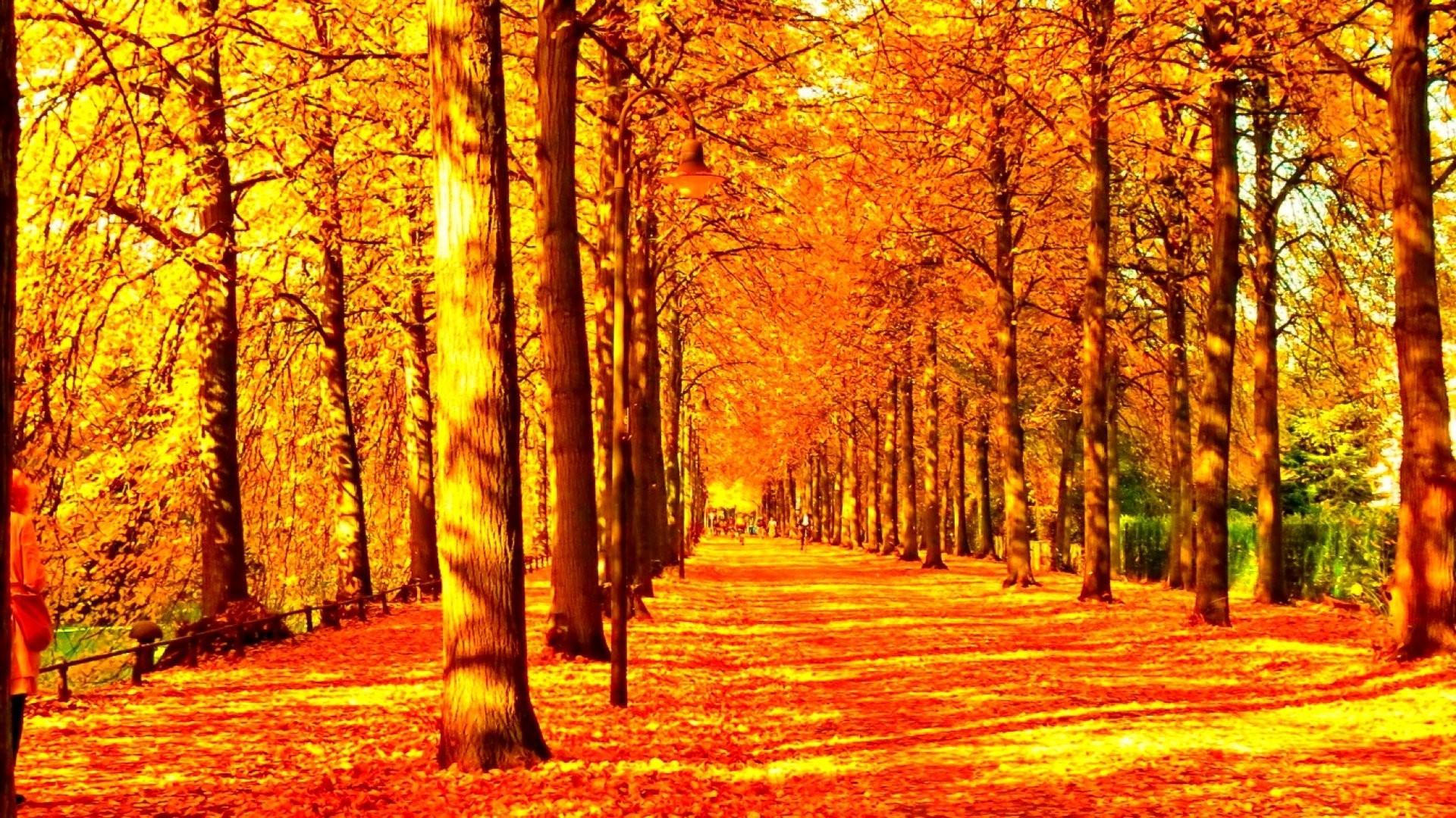 #991100 Color – Season Fall Seasons Landscape Nature Autumn Tree Leaves  Leaf Forest Color Nice