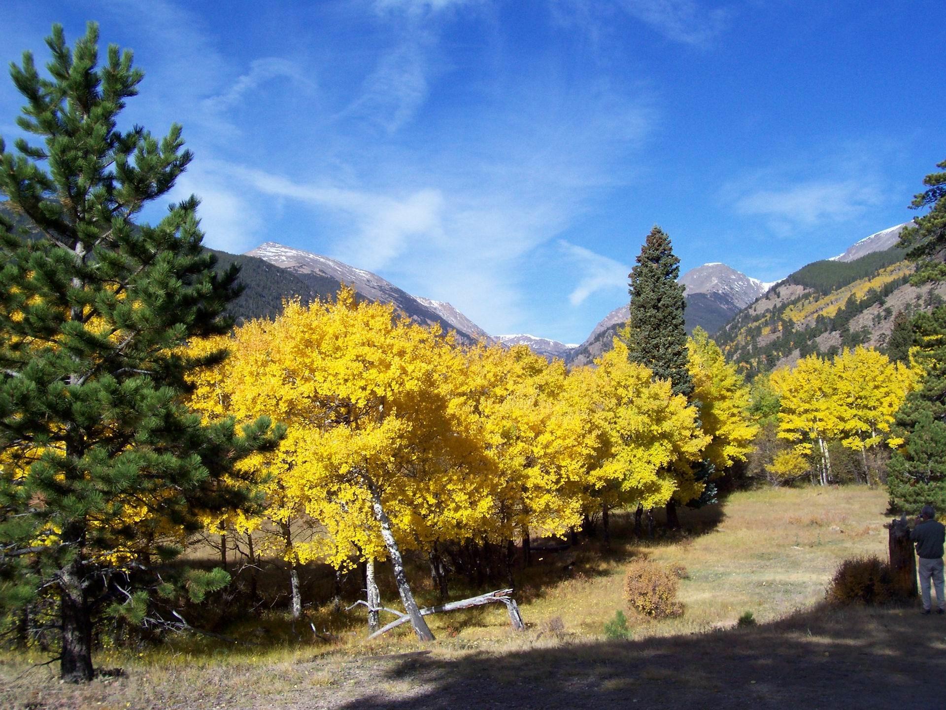 Colorado Rocky Mountains Fall Color Wallpaper