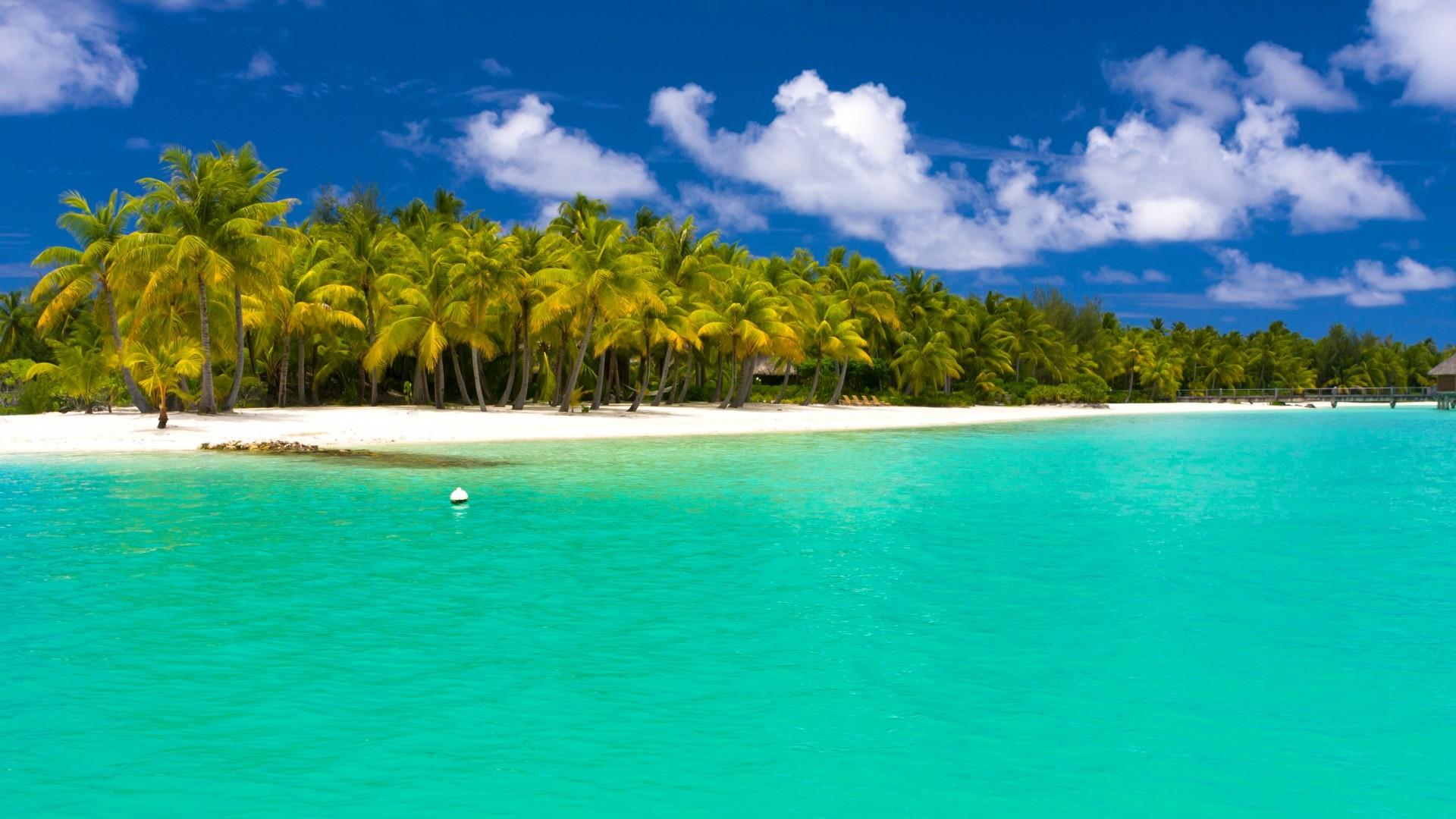 Preview wallpaper summer, maldives, tropical, beach, palm trees 1920×1080