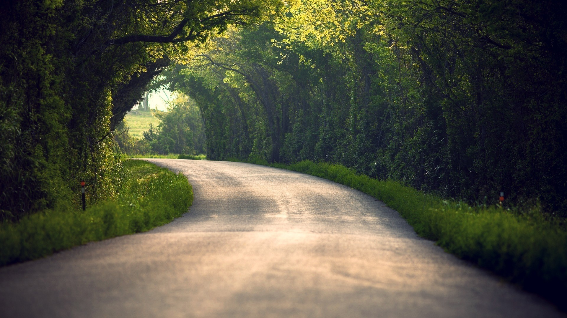 Preview wallpaper summer, nature, road, leaves, trees 1920×1080