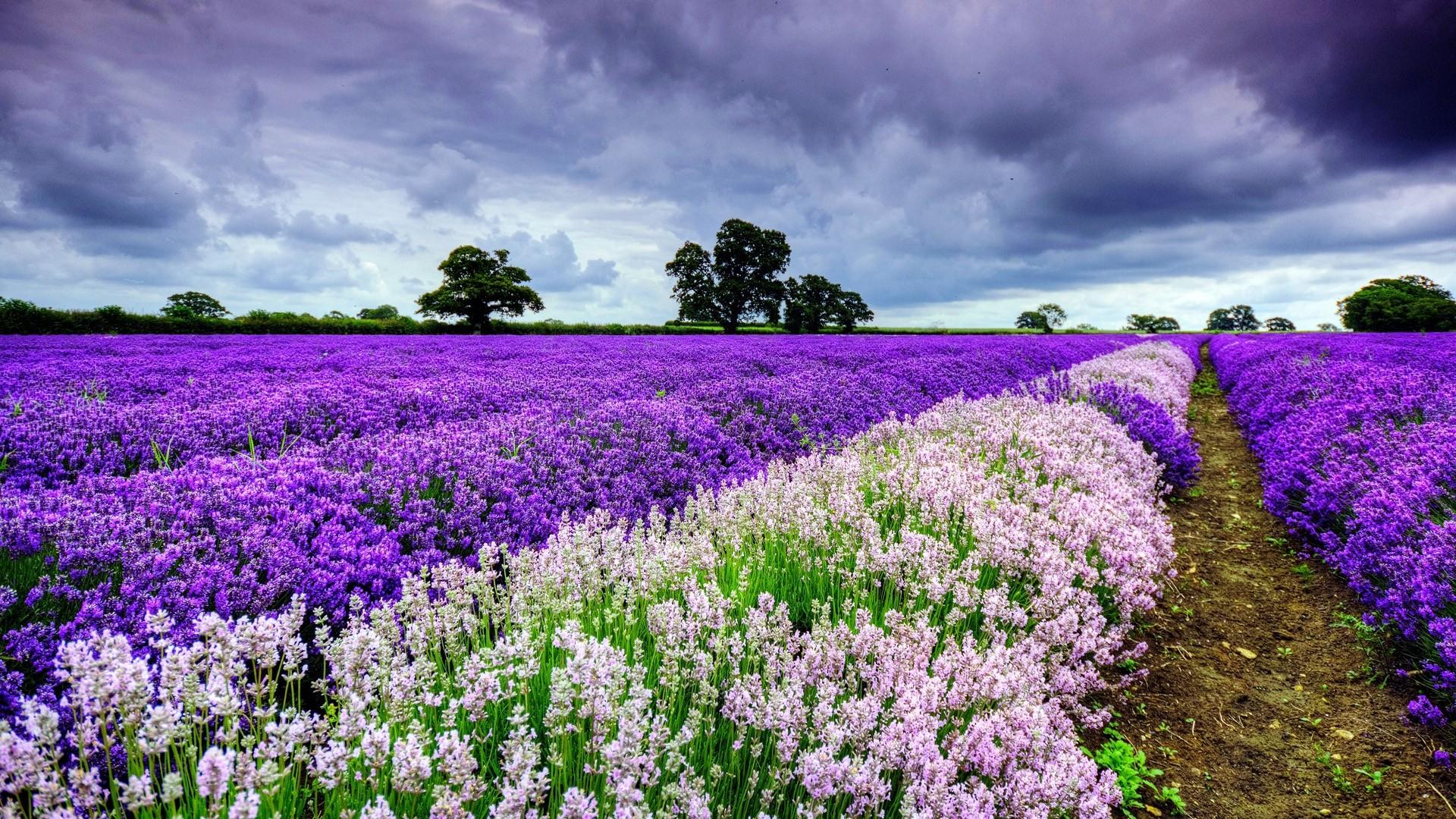 Wallpaper field, flowers, distance, summer