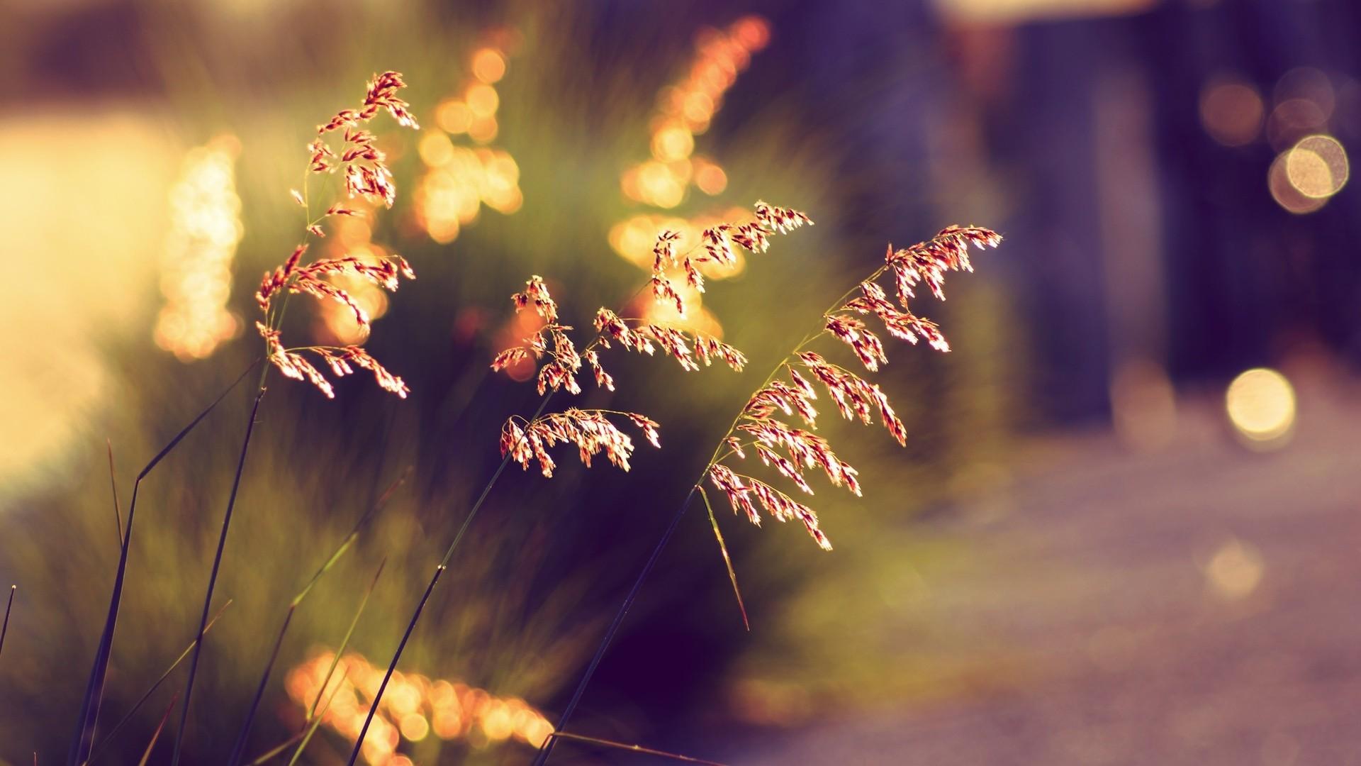 Wallpaper bokeh, sunset, grass, summer