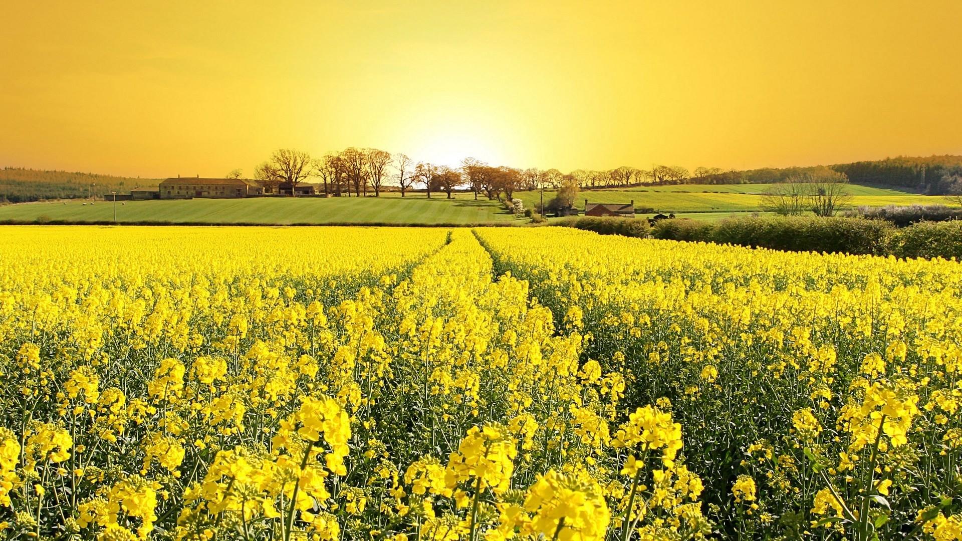 Wallpaper grass, flowers, field, nature, summer