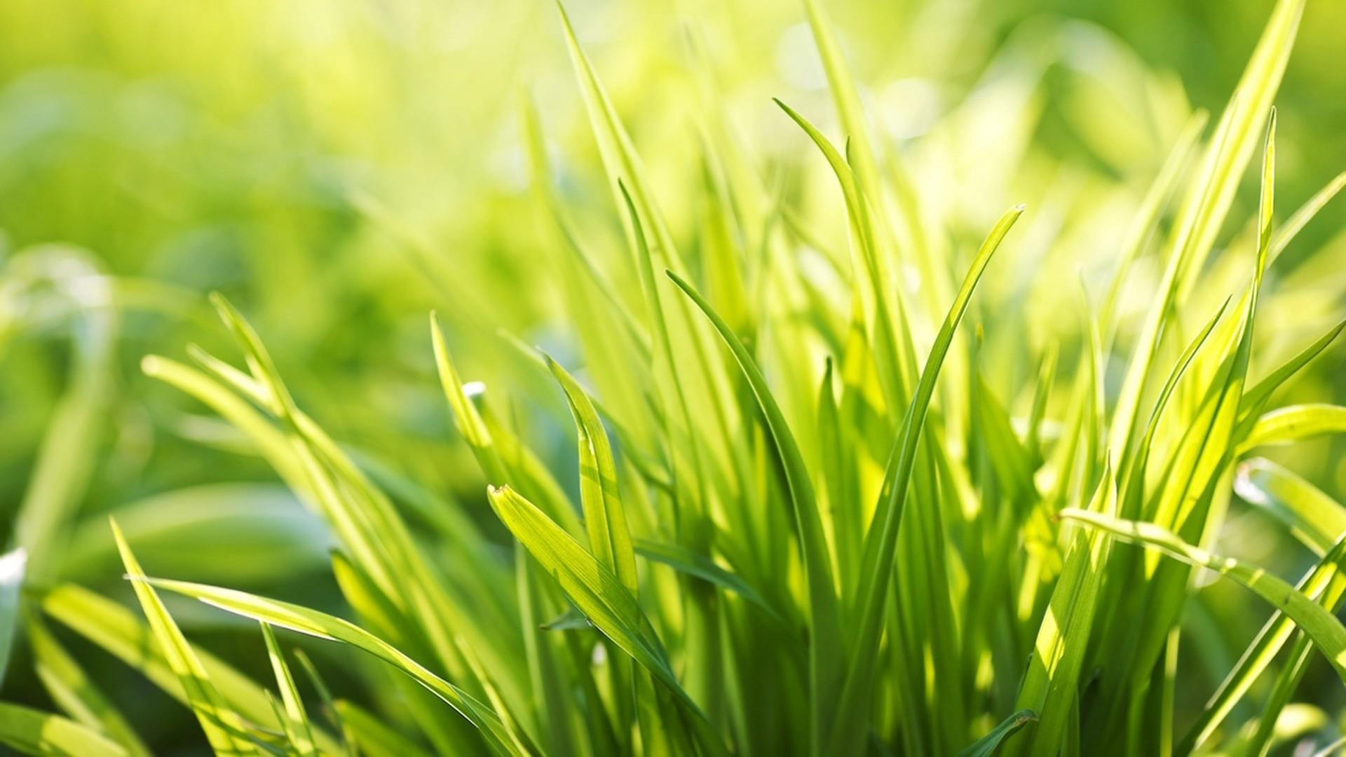 Wallpaper grass, form, size, summer