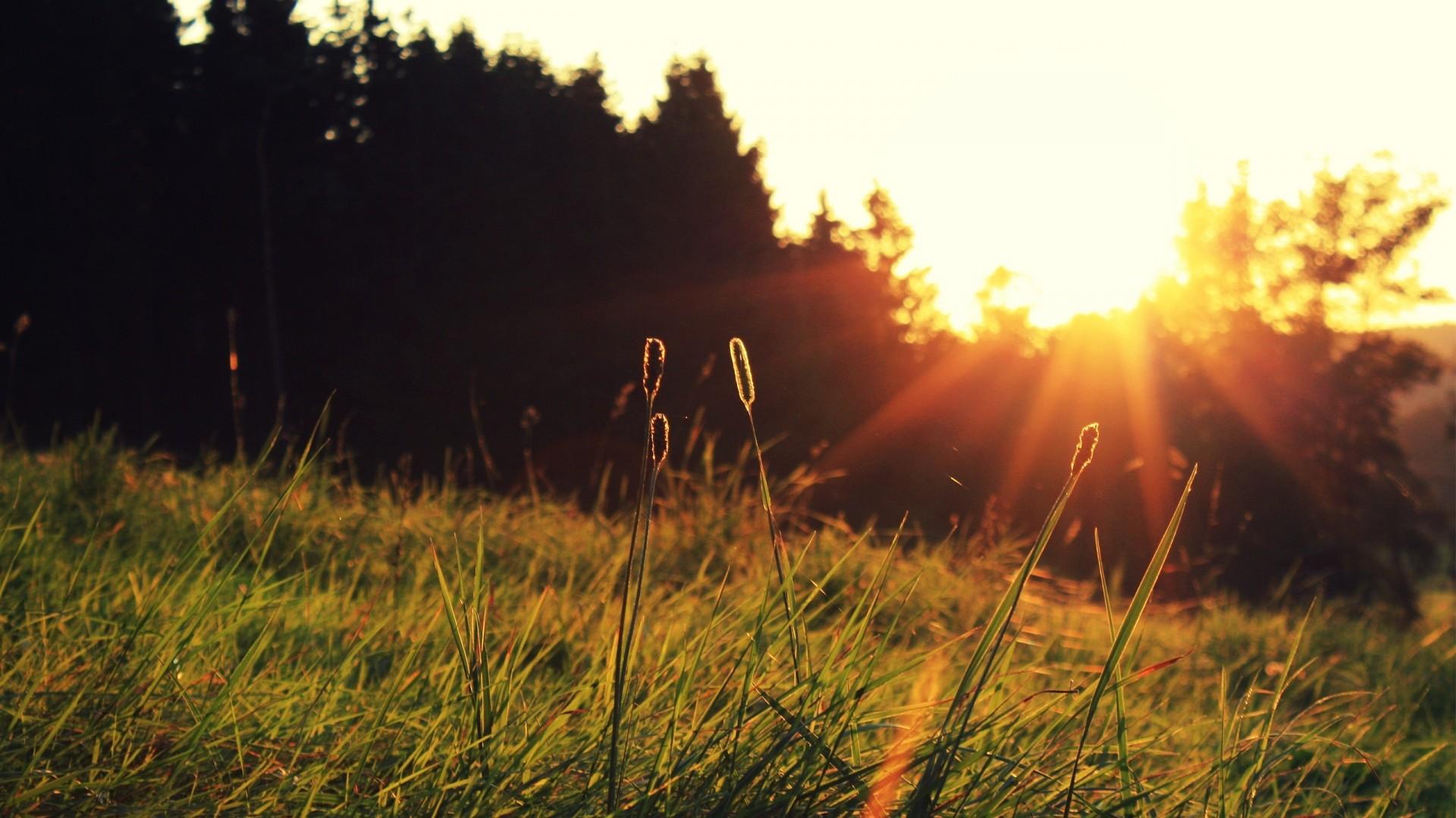 Wallpaper sun, light, blades, beams, decline, field, foreground,