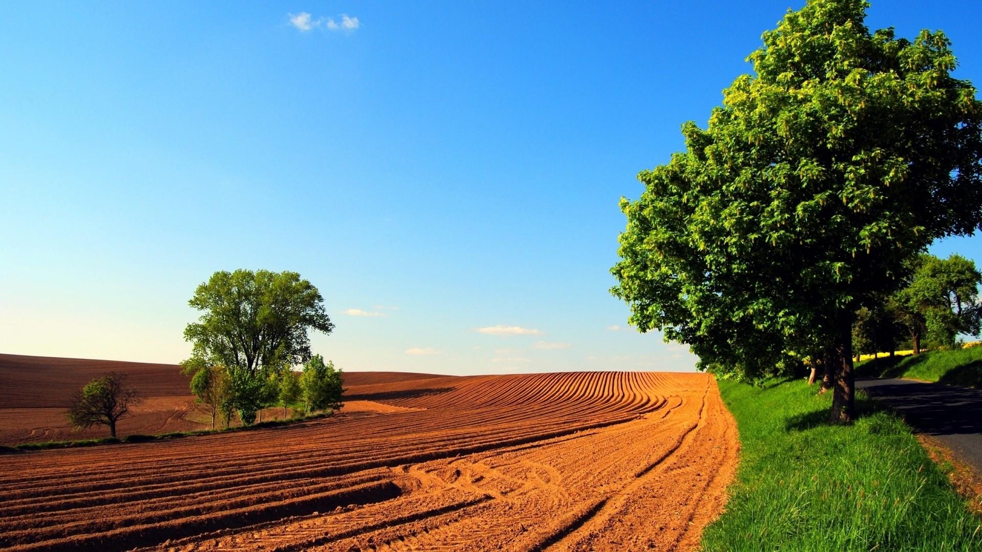 Wallpaper arable land, field, trees, summer