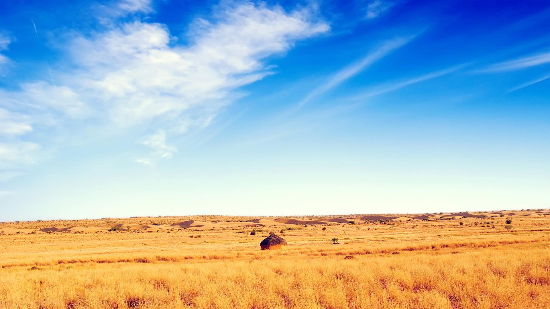 Summer Meadow HD Wallpaper