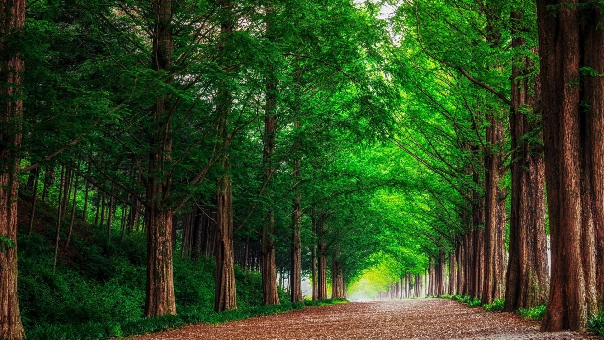 Wallpaper forest, road, trees, landscape, summer