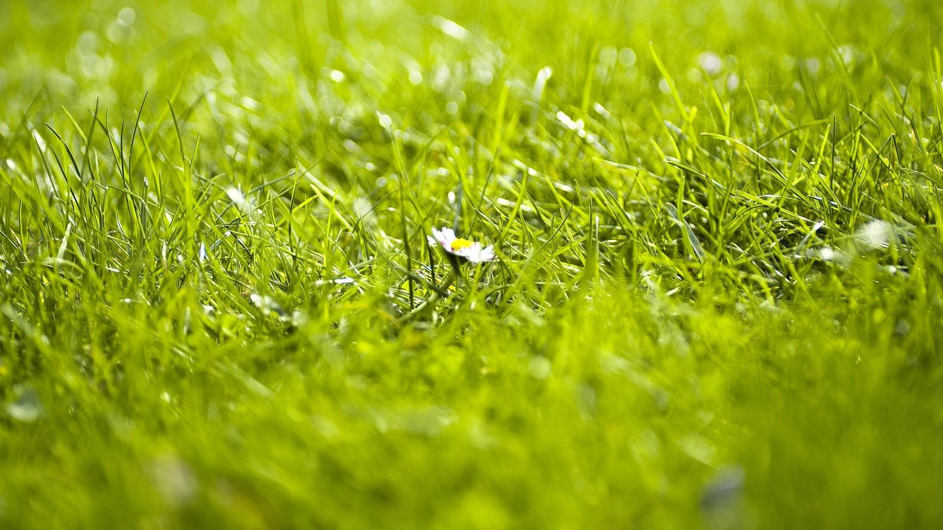Wallpaper grass, flower, summer
