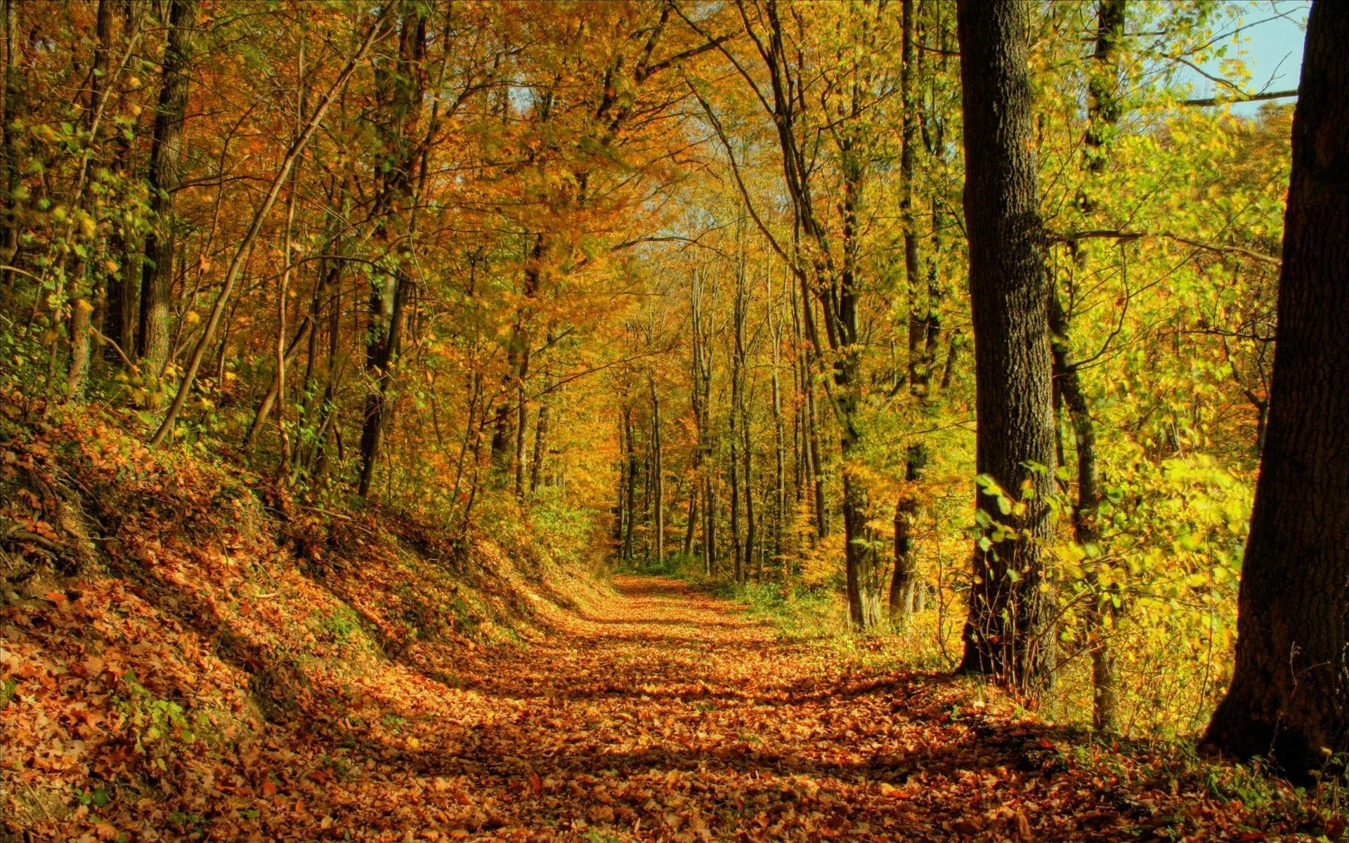 Forest Landscape Wallpapers Desktop Background