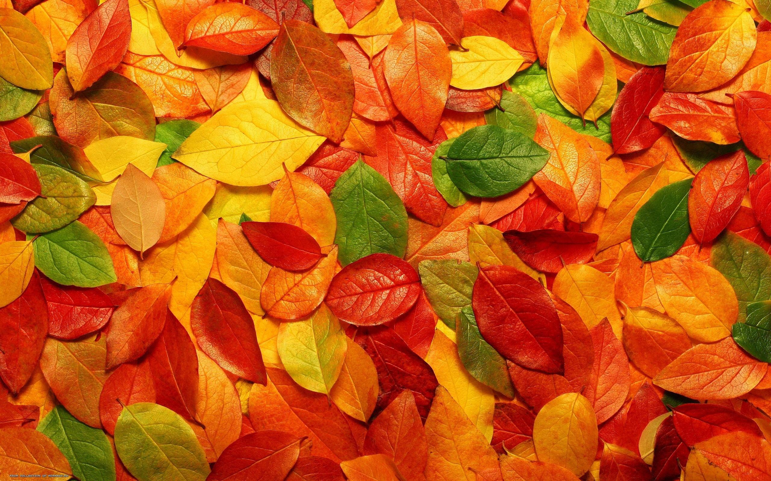 Fall Leaves Tumblr Background Autumn Leaves #8221