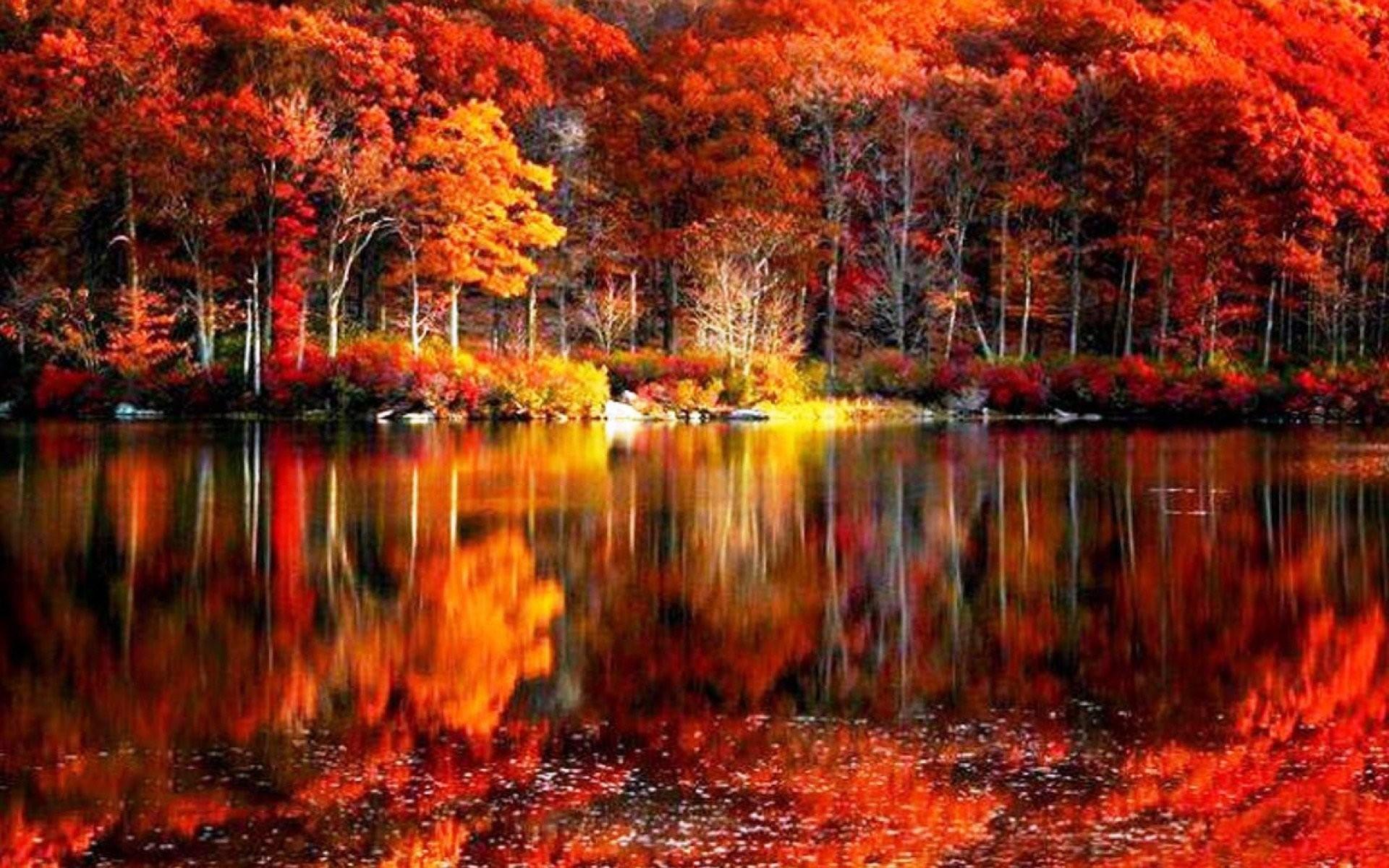 fall foliage river autumn red lake reflections shore beautiful .