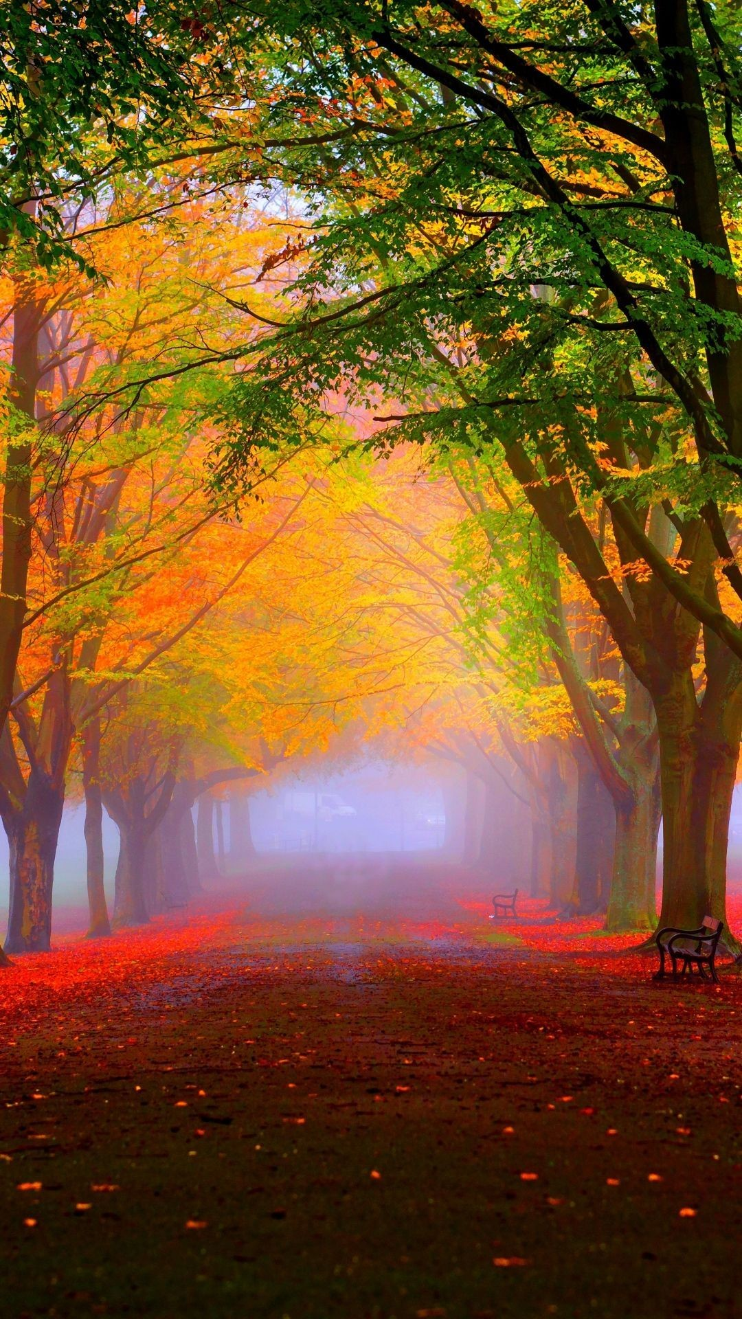 HD Background Forest Trees Fog Fall Leaves Wallpaper