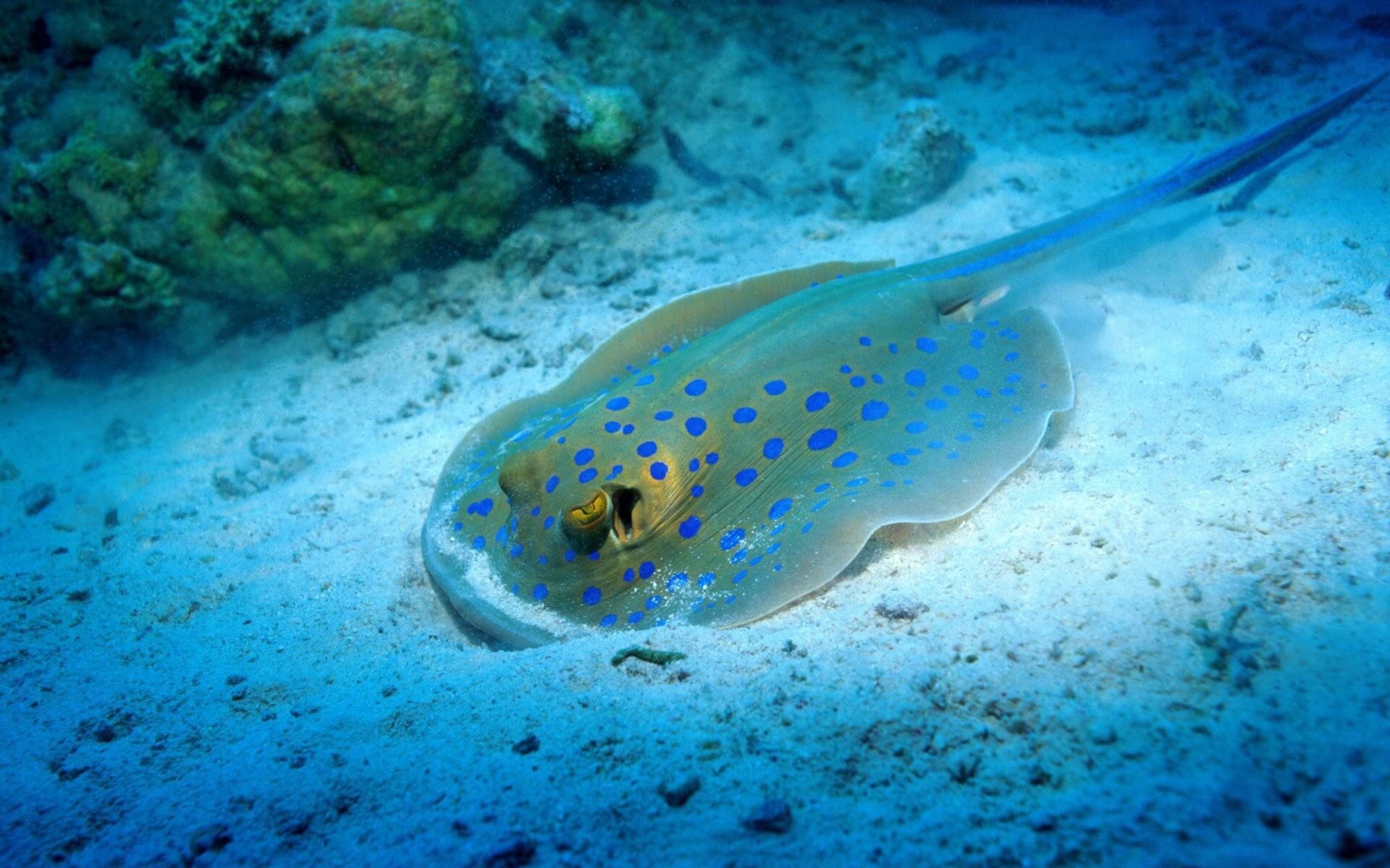 Ocean Life Marine Life Pics   Daily Pics Update   HD Wallpapers .