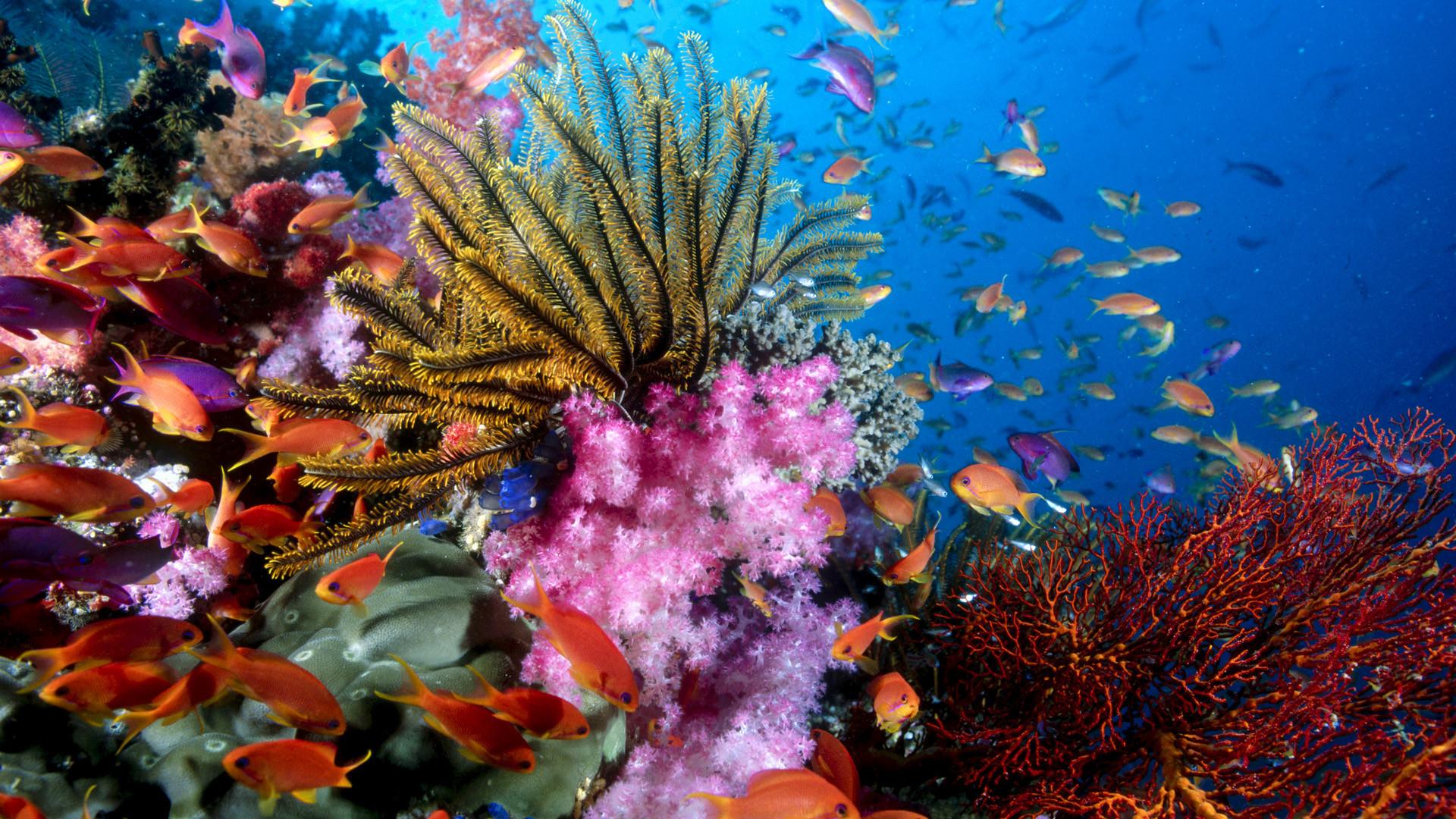 Animal – Sea Life Wallpaper