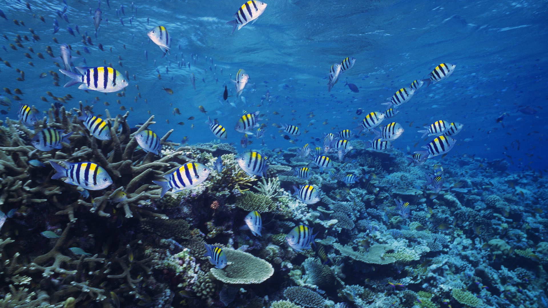 Ocean Sea Life Wallpaper for Tablet PC