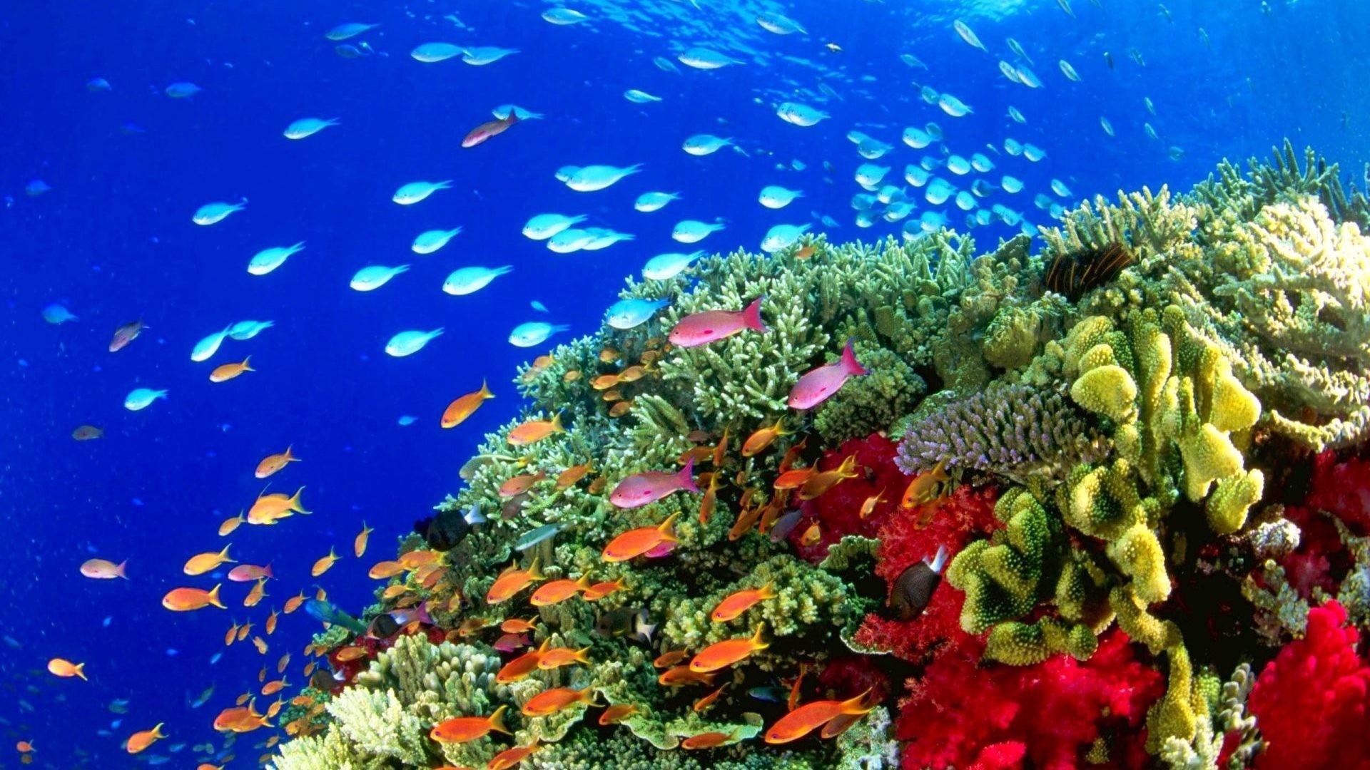 Fish Tag – Sealife Fish Ocean Underwater Fishes Sea Nature Pictures  Aquarium Stock Photography for HD