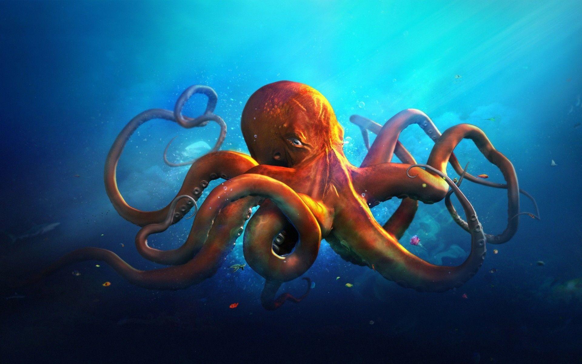 Octopus Desktop Wallpaper
