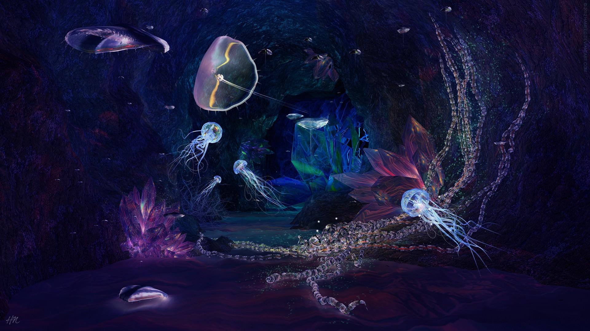 Sealife Tag – Jellyfish Sealife Underwater Nature Oceans Ocean Wallpaper  For Iphone 6 for HD 16