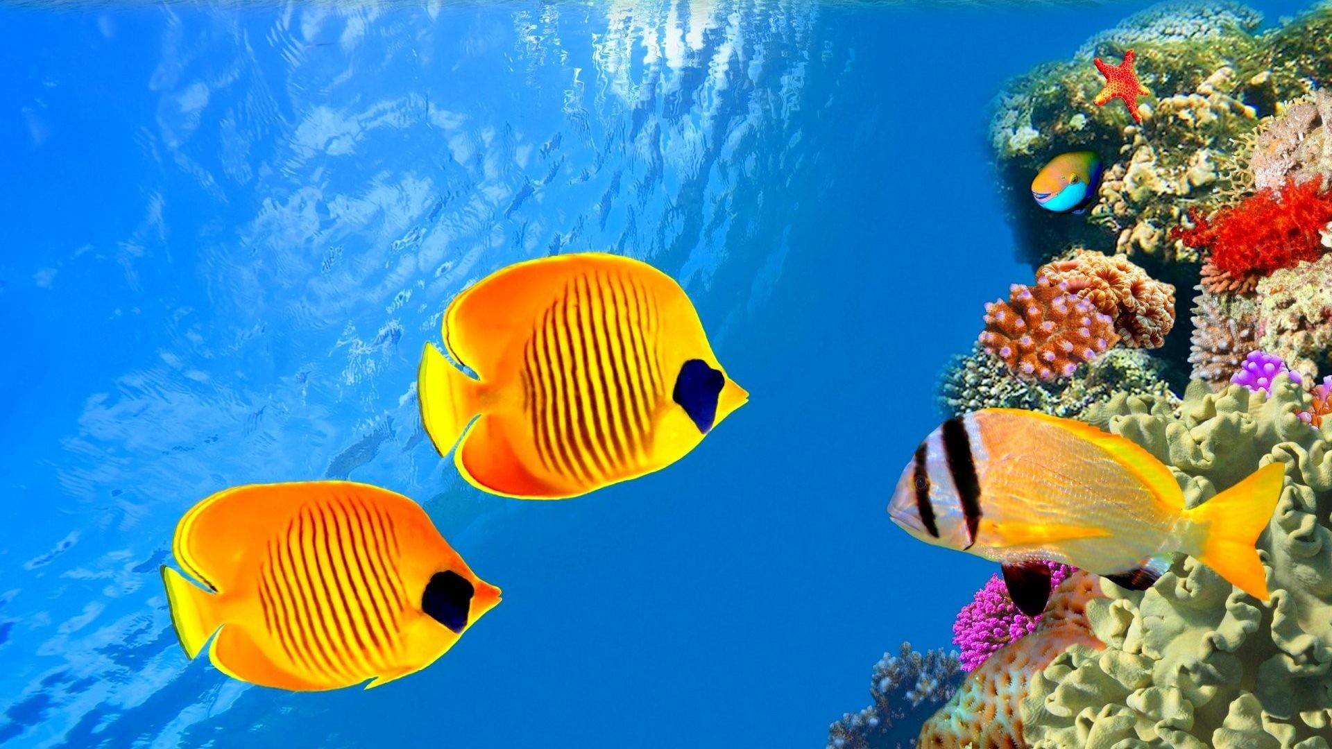 Underwater Tag – Nature Fish Sea Underwater Fishes Ocean Sealife Moving Hd  Wallpaper for HD 16