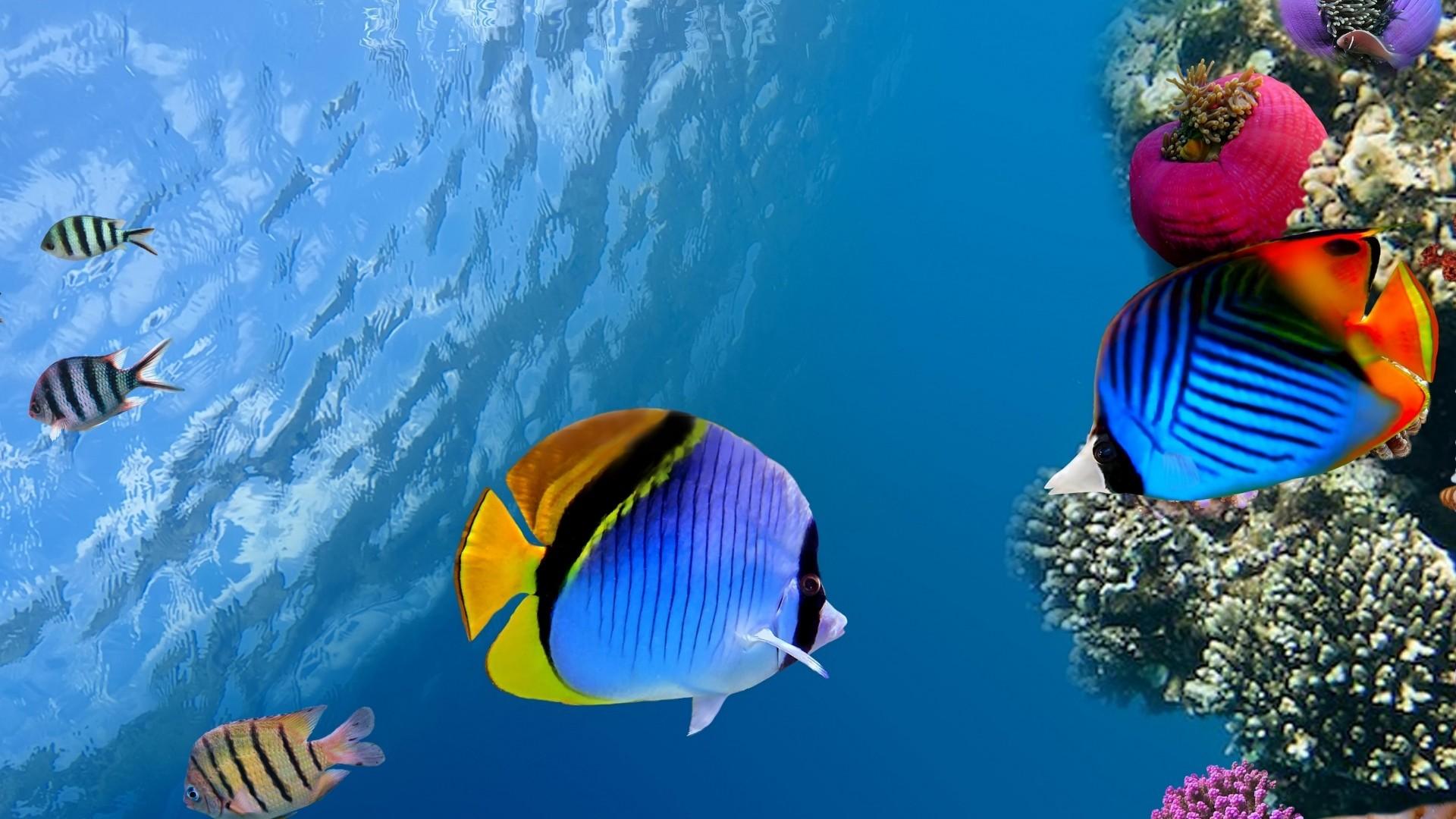 Wallpaper under water, coral, fish, sea, ocean
