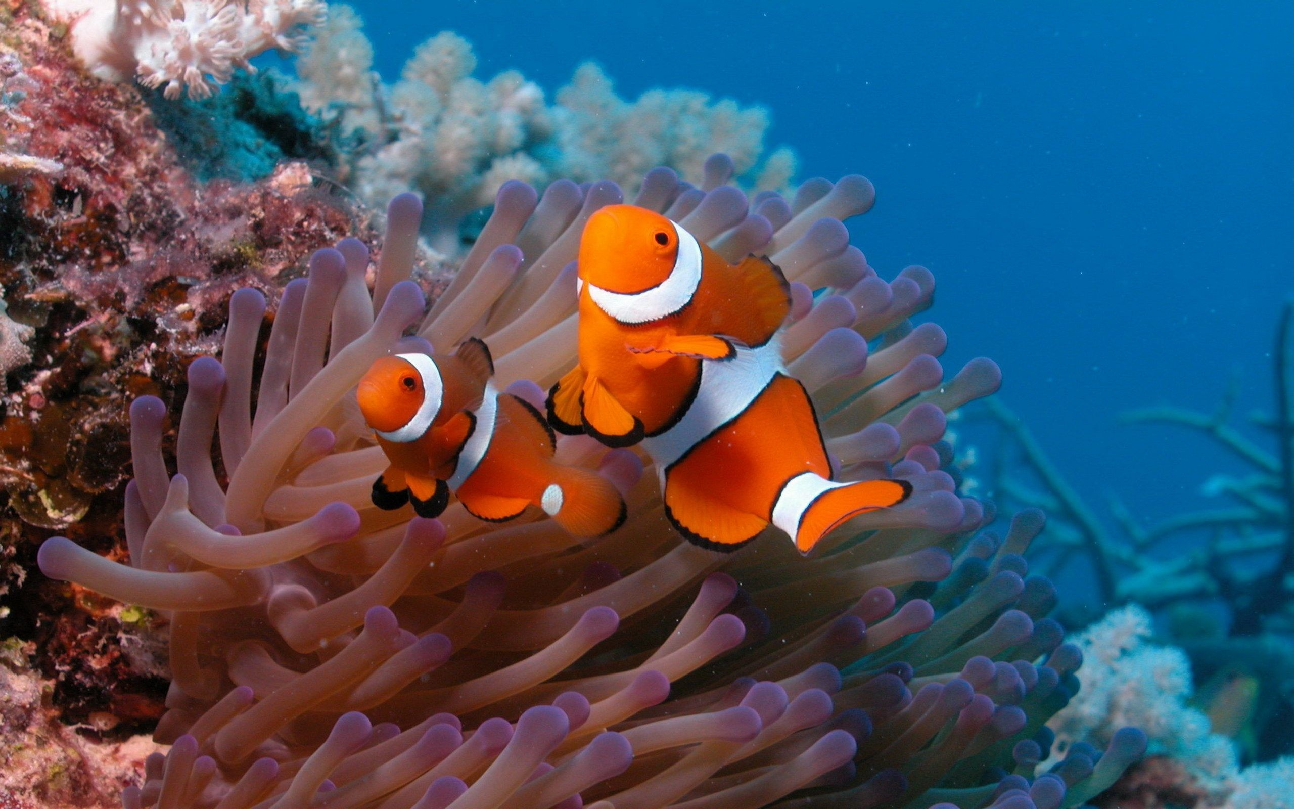 Download Coral Reef HD Wallpapers 6350 px High .