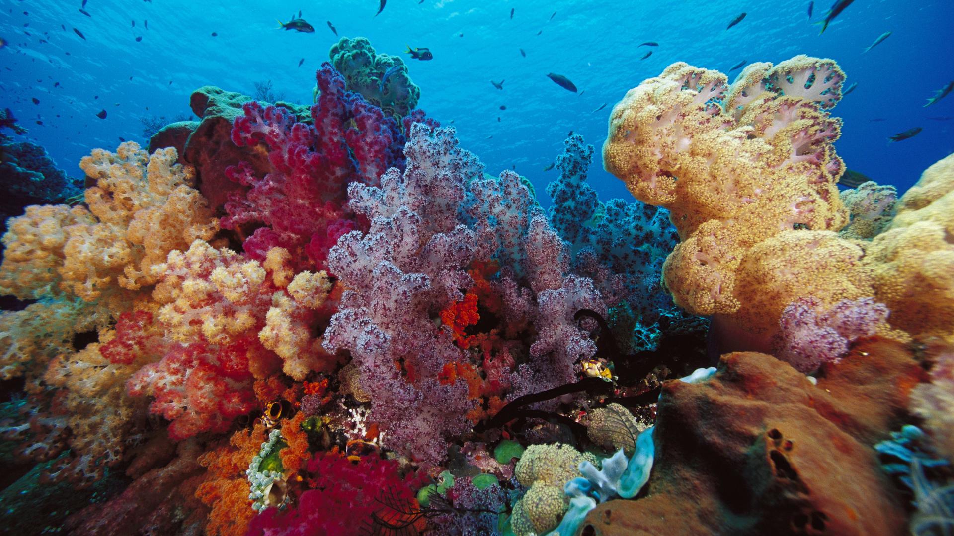 Animal – Sea Life Ocean Nature Reef Fish Wallpaper