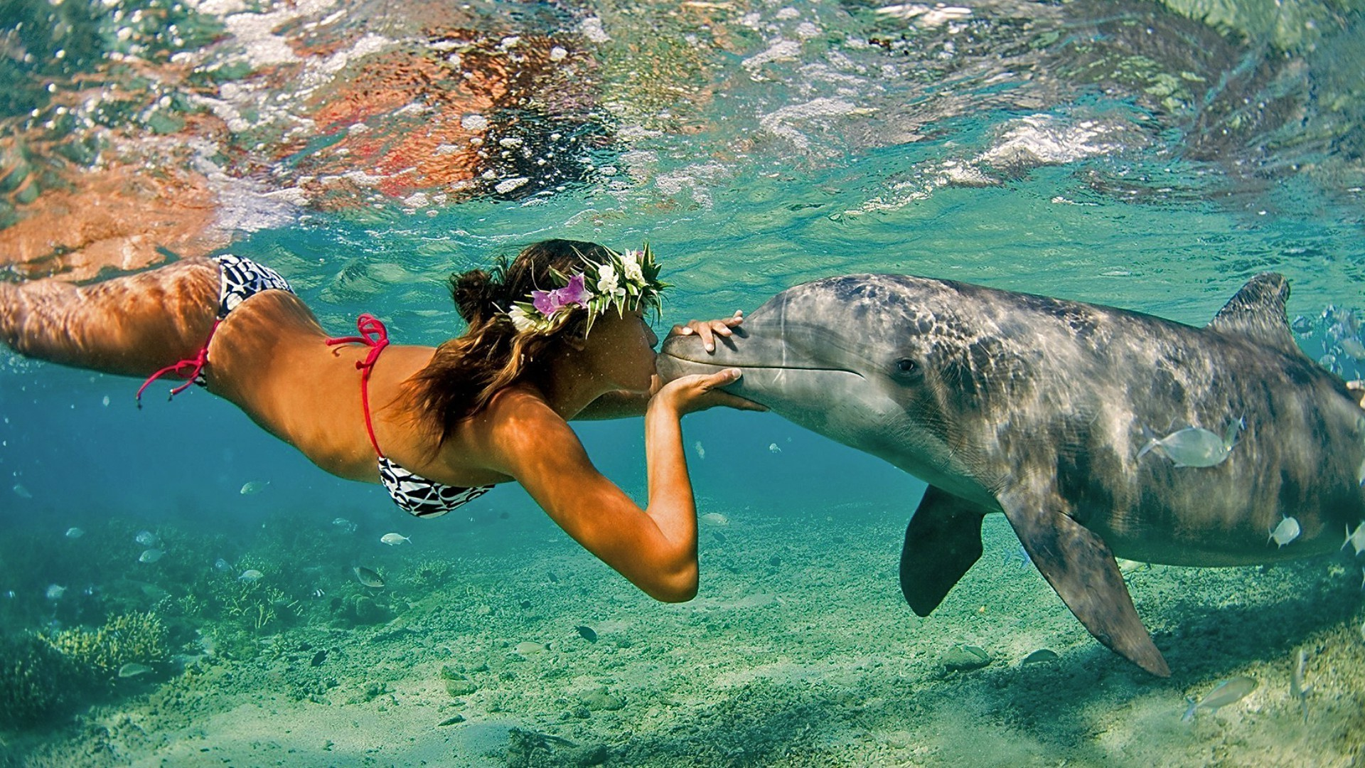 Marine life water swimming underwater ocean sea snorkeling nature tropical HD  wallpaper. Android wallpapers for free.