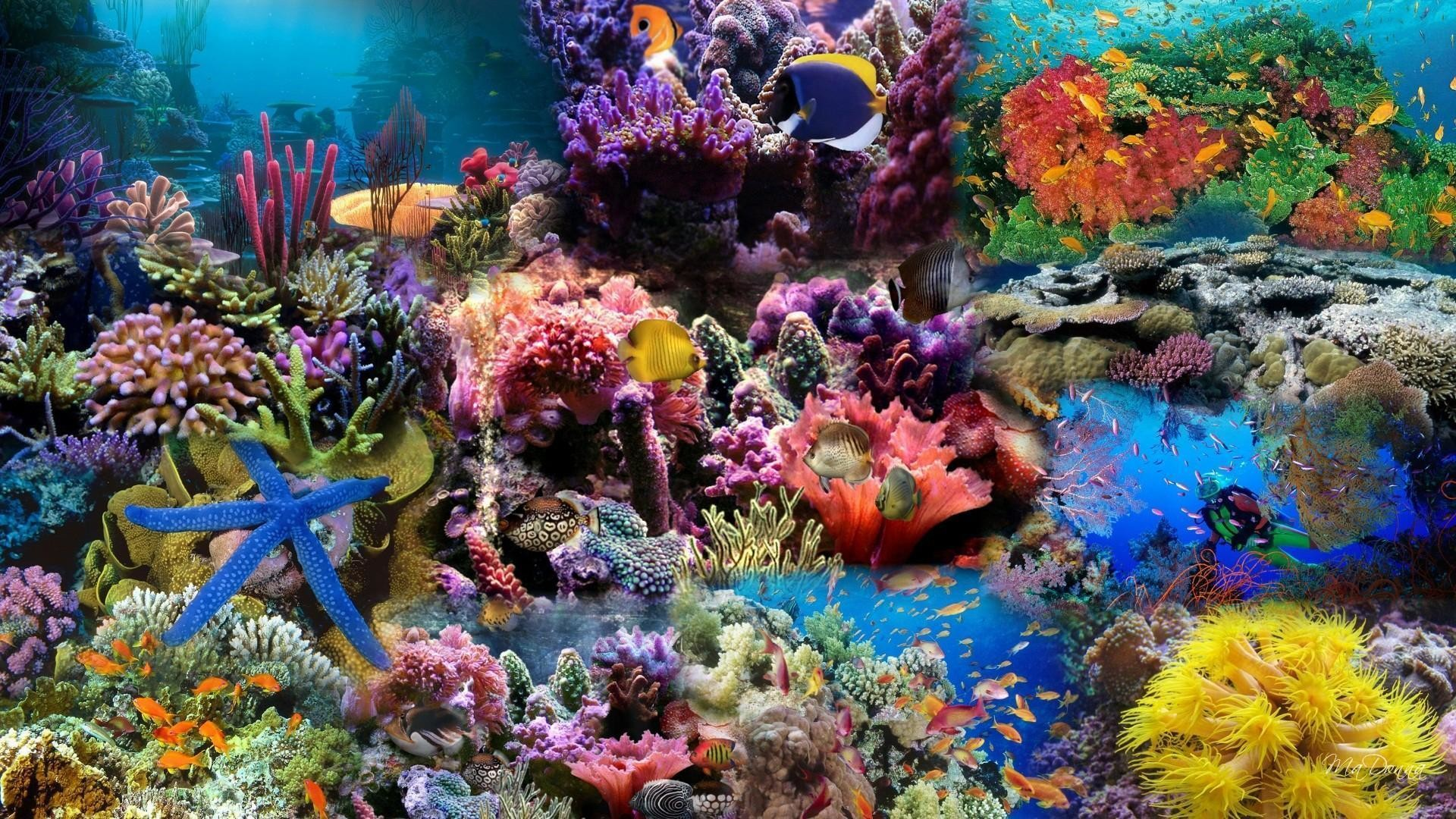 Wallpapers For > Coral Reef Wallpaper 1920×1080