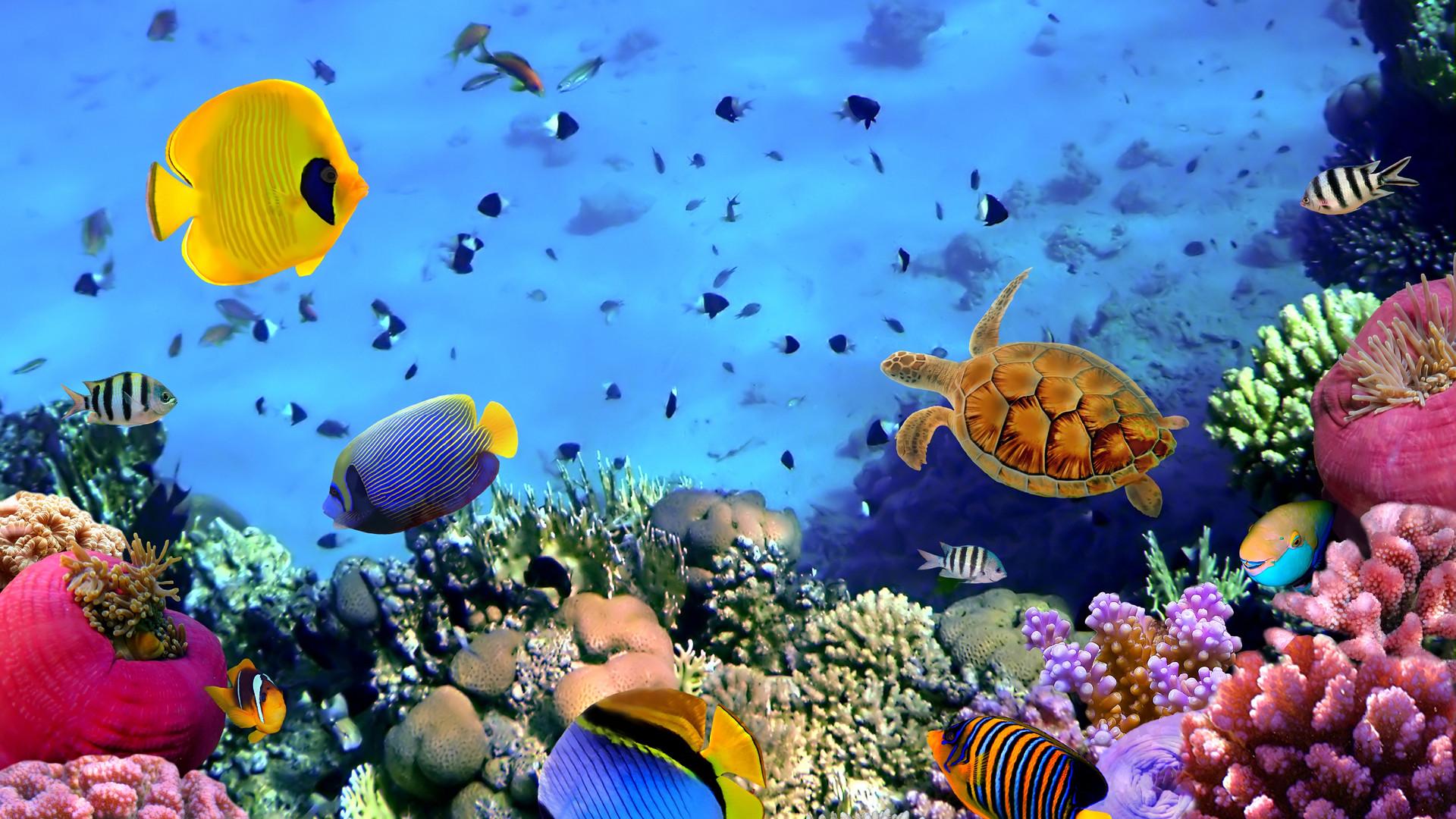 Barrier Reef Underworld Wallpaper. Travel HD Wallpapers provide HD .