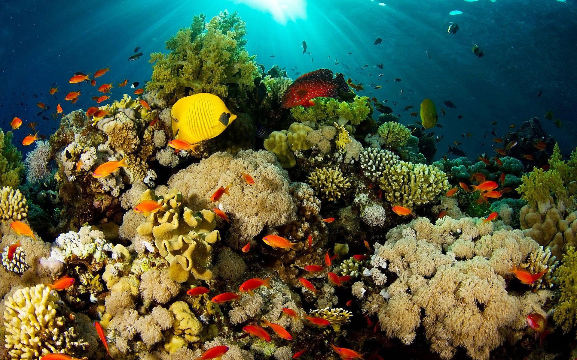 Coral Reef Wallpapers Wallpaper