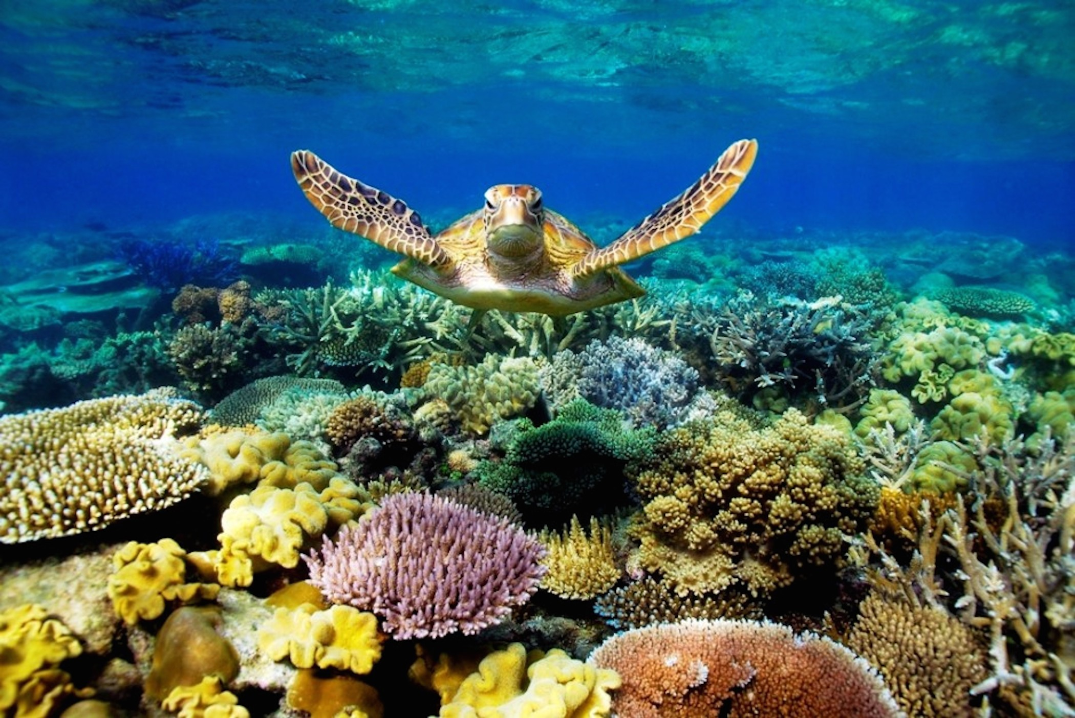 Coral Reef Wallpaper HD 2100×1403