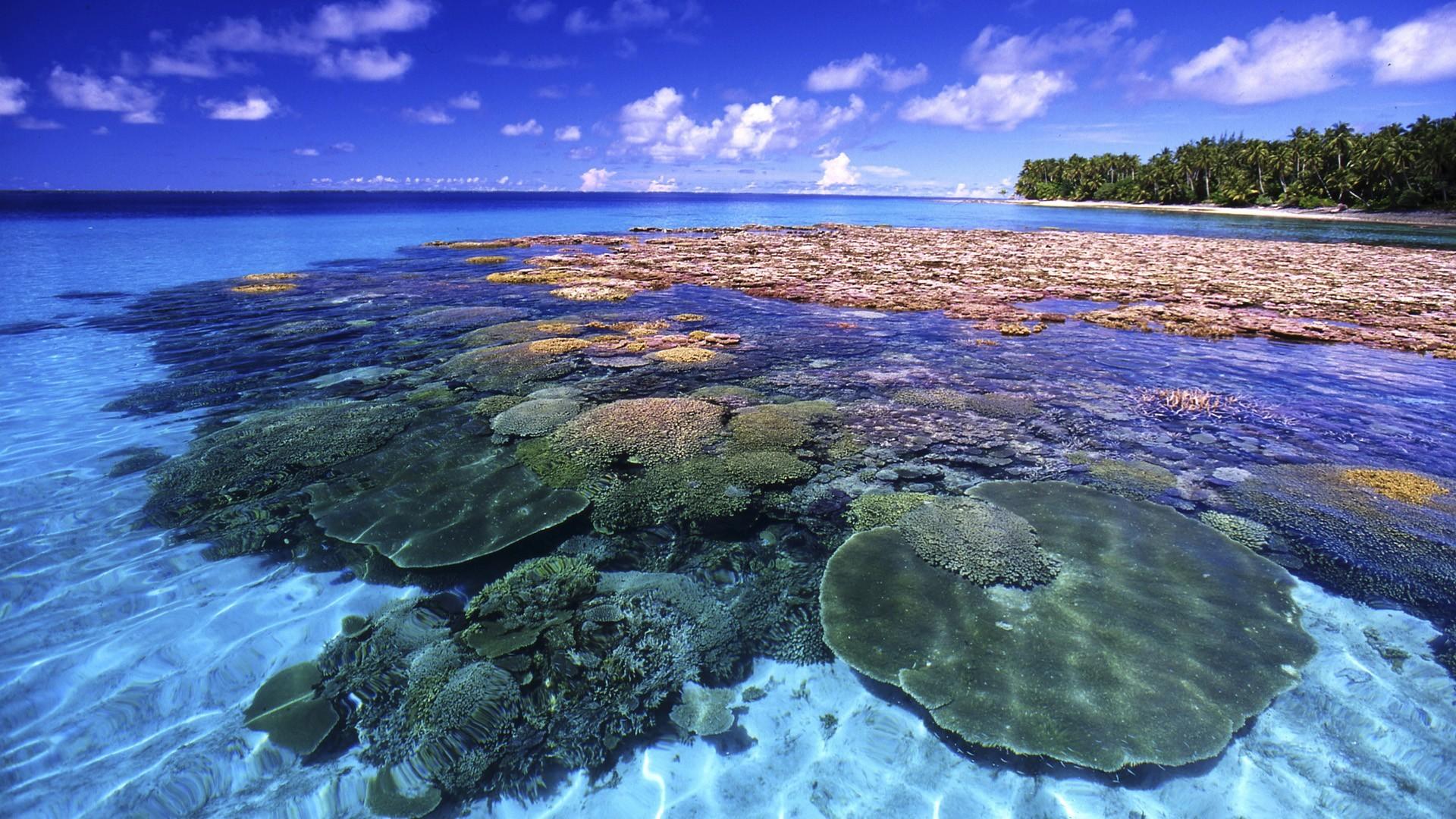 Great Barrier Reef, Queensland, Australia | Beautiful Photos and .