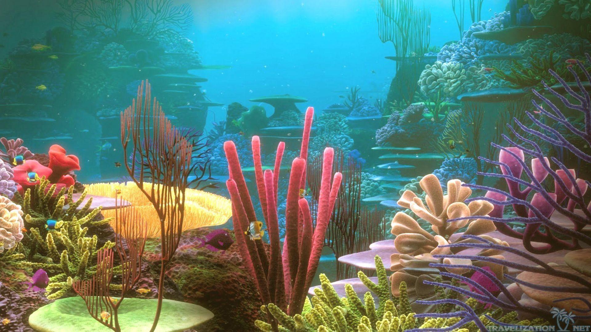 Colorful Coral Reef Desktop, Under Water Wallpaper, hd phone .