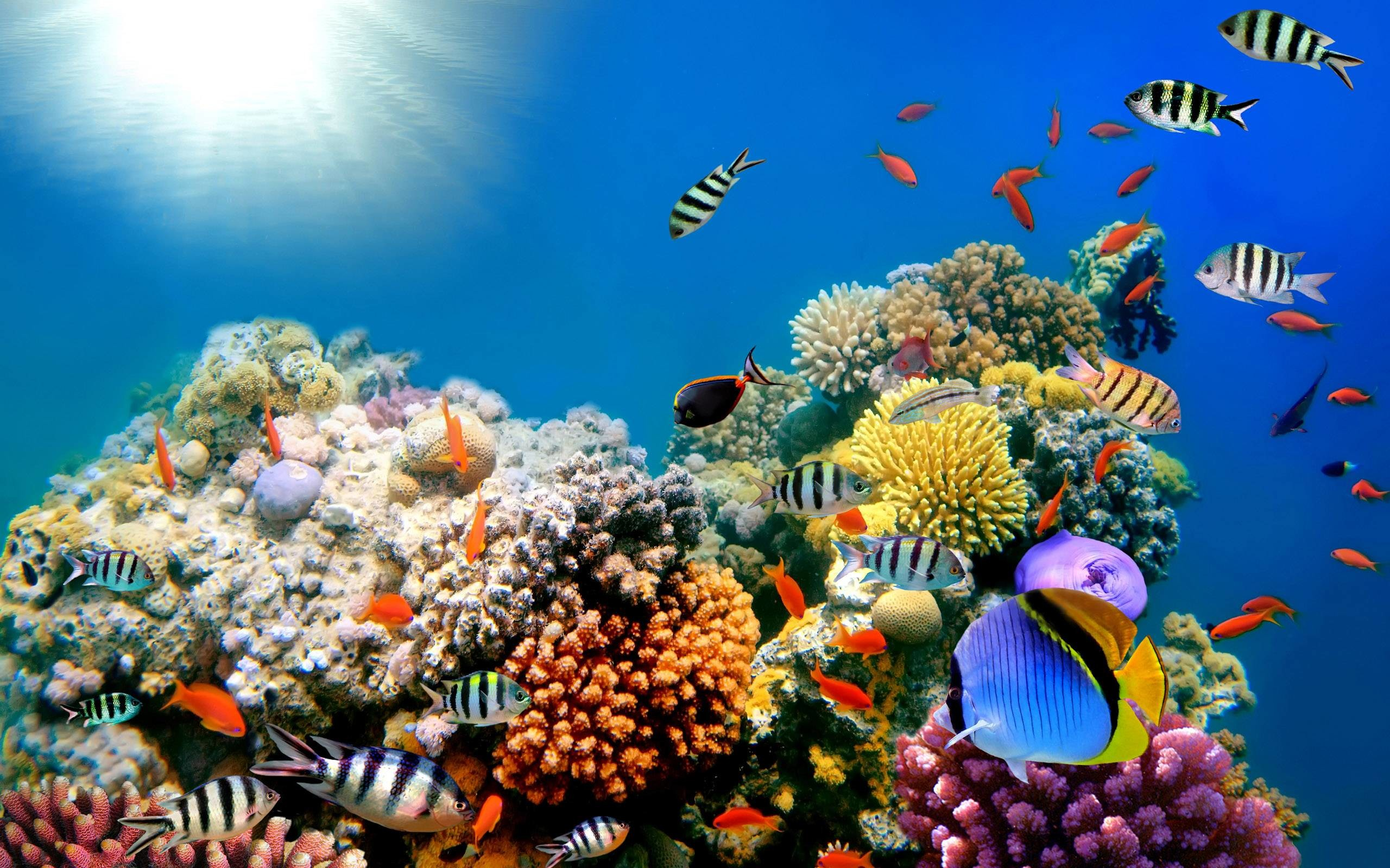 Coral Reefs Fish Background Wide or HD | Animals Wallpapers