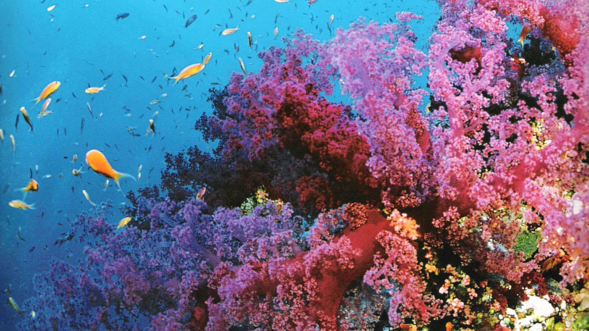 Reef Wallpaper Great Barrier Reef Wallpaper Great Barrier Reef Fish .