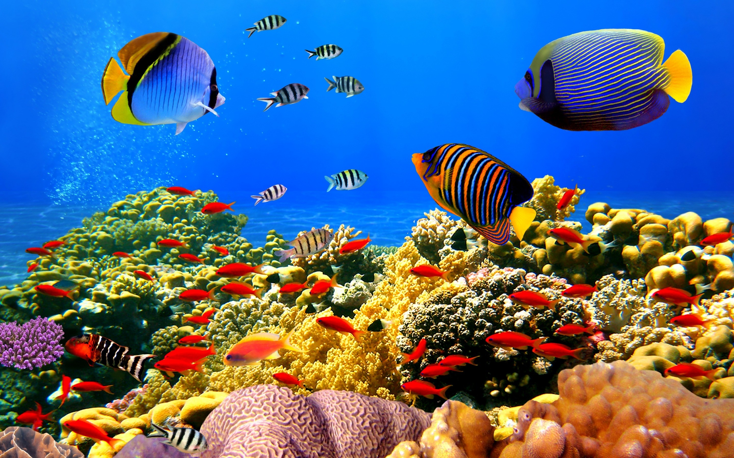 Awesome Scenes of Underwater Creature Wallpapers | Wallpapers 4k |  Pinterest | Underwater creatures and Wallpaper